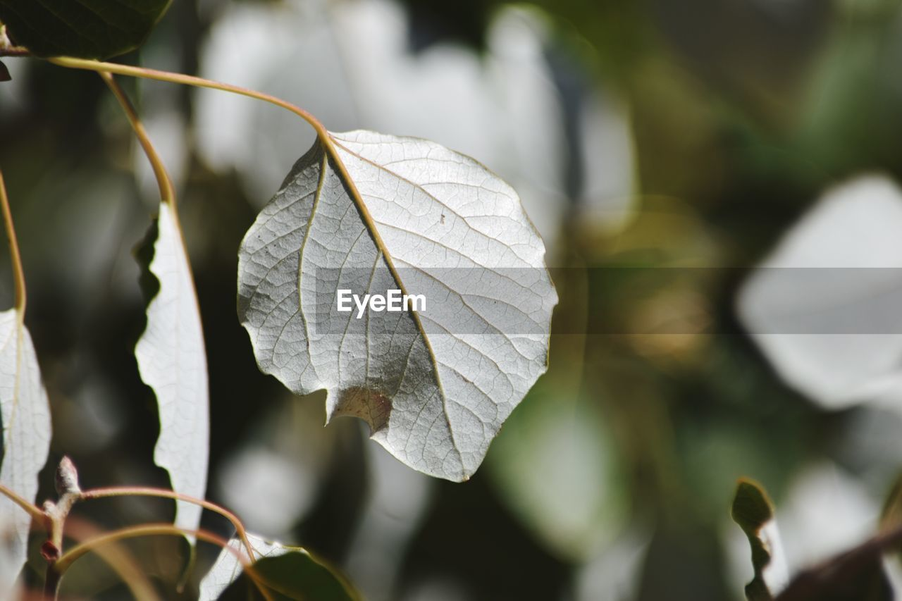 leaf, focus on foreground, day, close-up, outdoors, no people, growth, nature, fragility