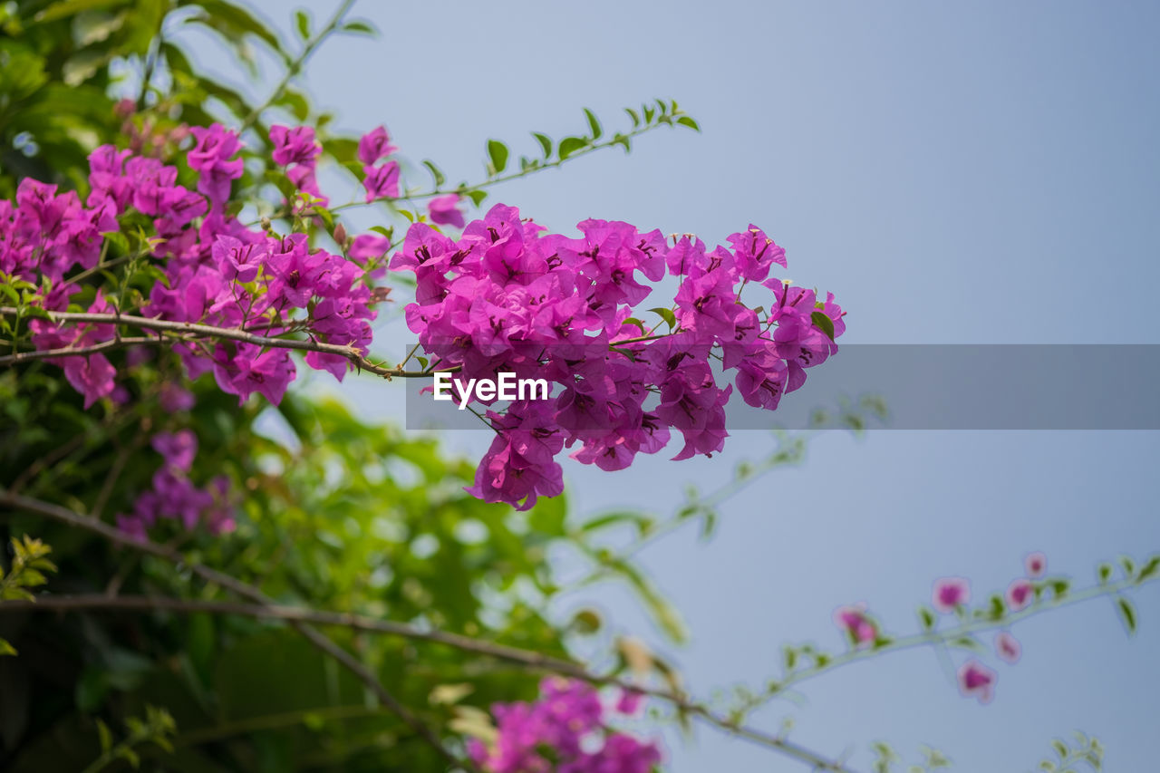 flowering plant, flower, plant, vulnerability, fragility, beauty in nature, growth, freshness, pink color, nature, close-up, petal, day, focus on foreground, purple, blossom, no people, inflorescence, botany, selective focus, springtime, flower head, outdoors, lilac, bunch of flowers