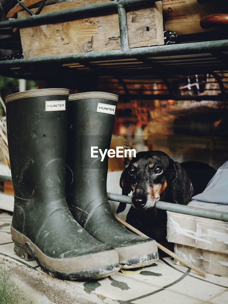 canine, one animal, dog, domestic animals, domestic, pets, mammal, vertebrate, shoe, boot, people, day, low section, indoors, close-up, sitting