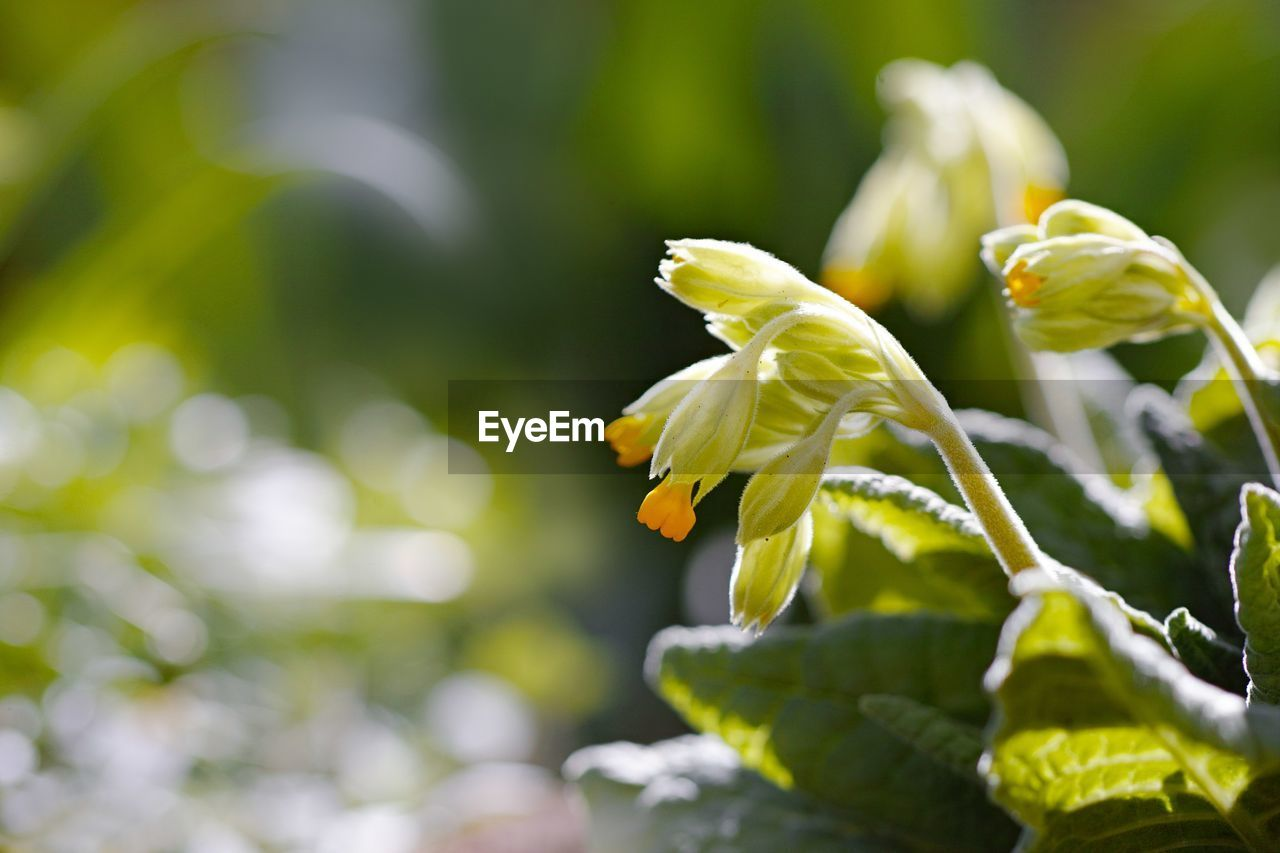 growth, plant, beauty in nature, vulnerability, flower, fragility, freshness, close-up, flowering plant, green color, selective focus, nature, no people, plant part, day, petal, leaf, focus on foreground, beginnings, flower head, outdoors