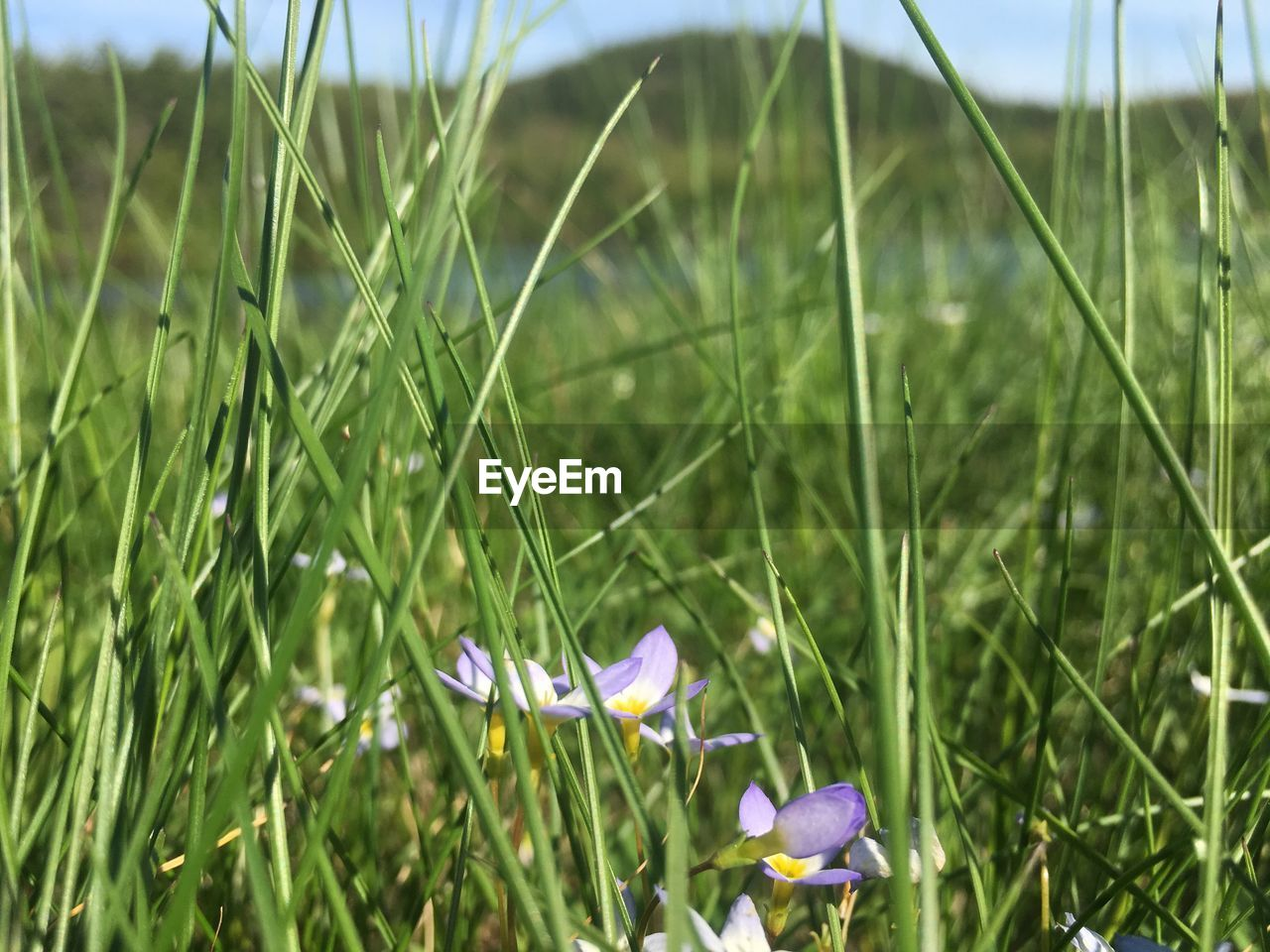 growth, flower, nature, field, plant, grass, beauty in nature, fragility, petal, outdoors, freshness, day, green color, no people, blooming, close-up, flower head