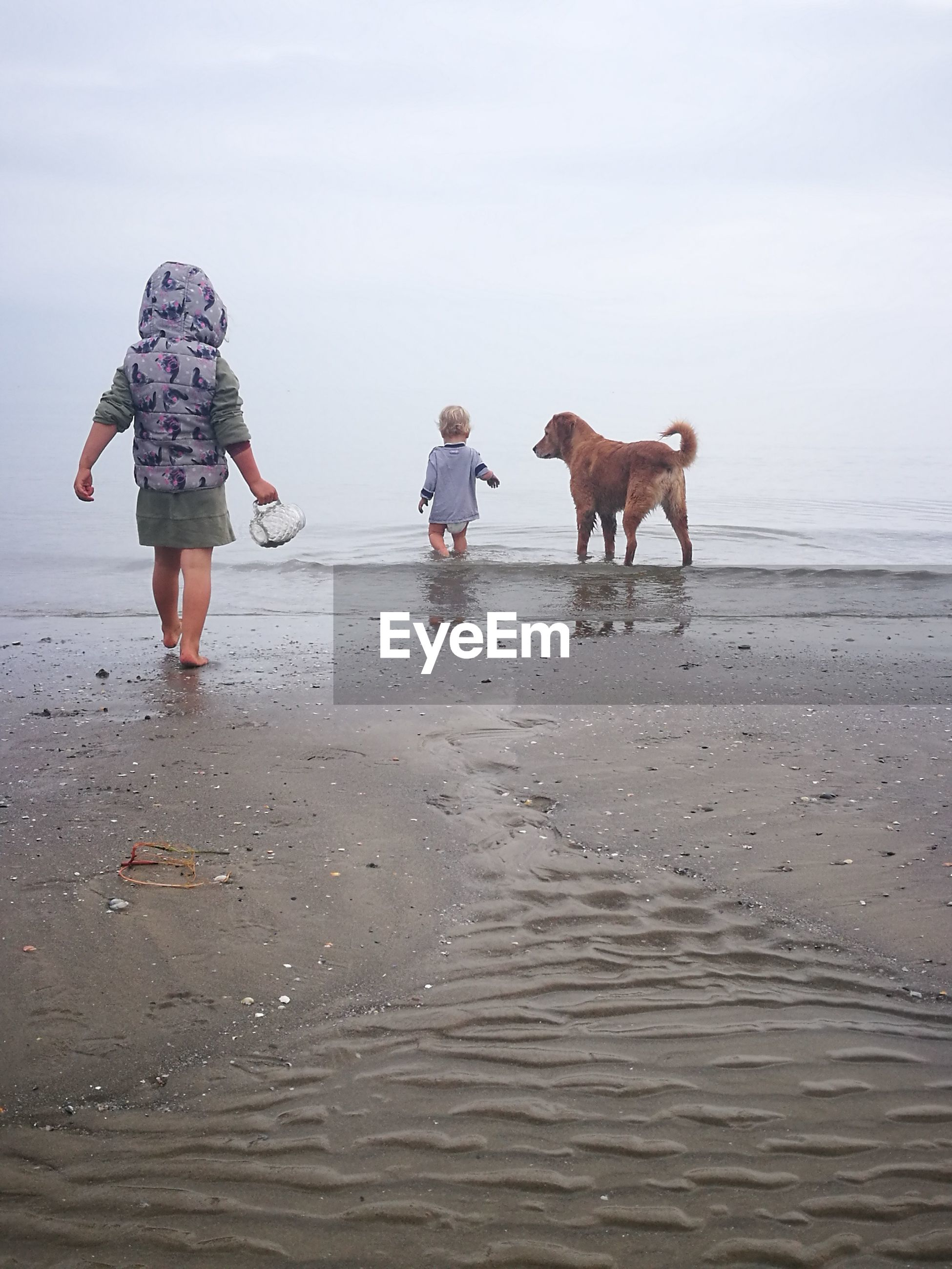 Rear view of children with dog at beach