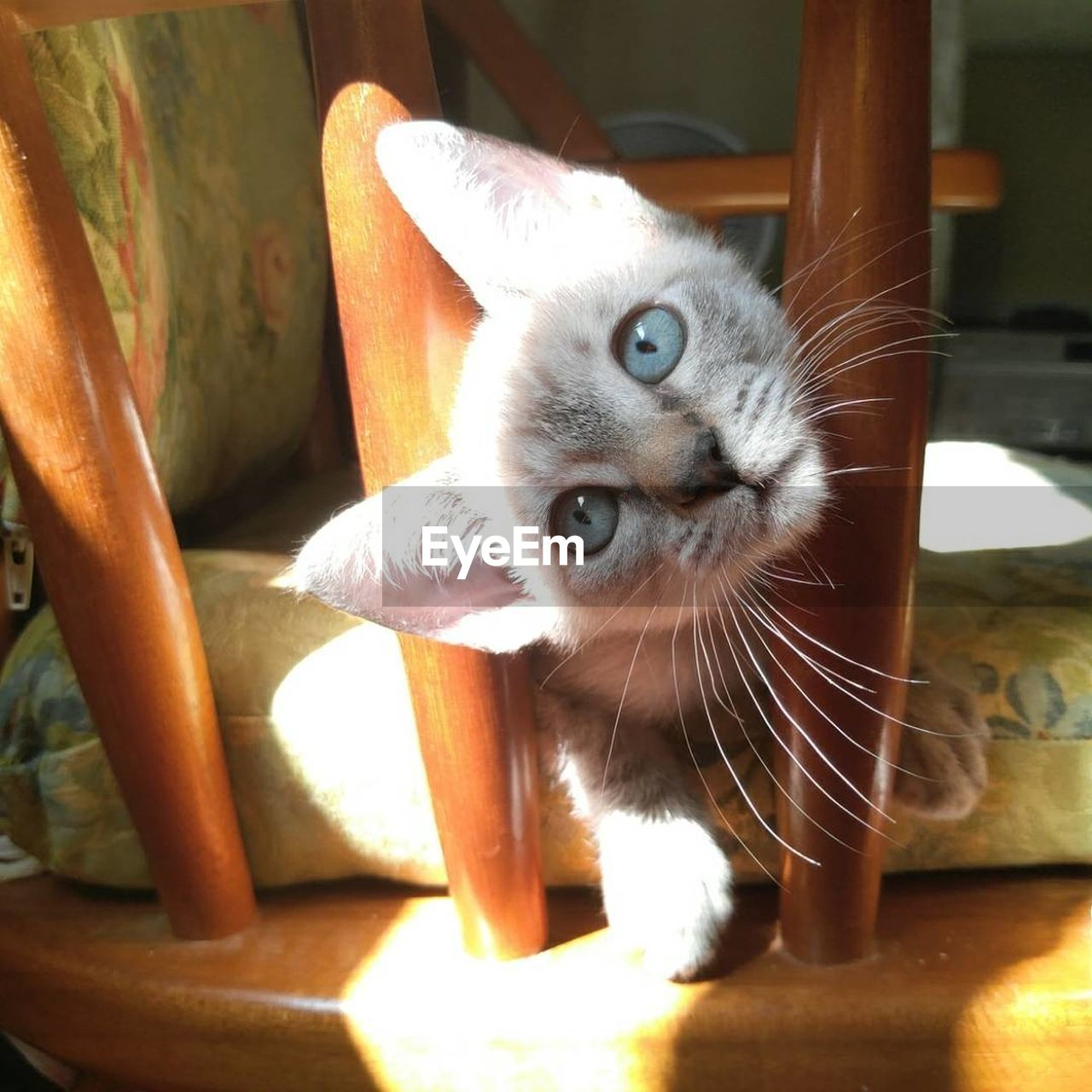 domestic cat, pets, domestic animals, animal themes, one animal, feline, mammal, whisker, looking at camera, portrait, no people, day, indoors, sunlight, close-up, kitten