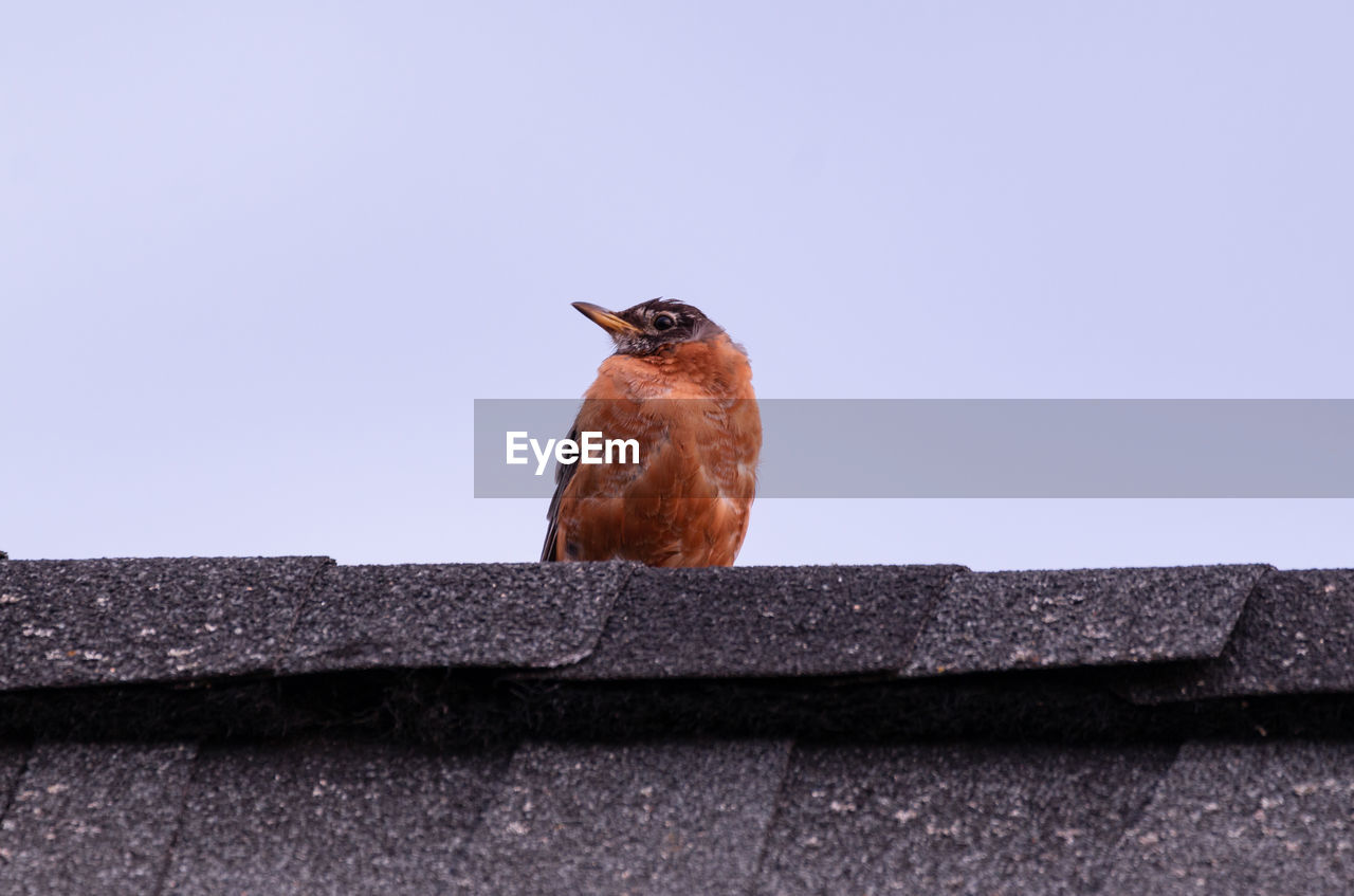 LOW ANGLE VIEW OF BIRD ON WALL