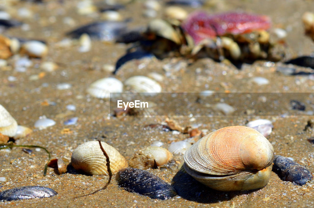 animals in the wild, animal themes, nature, one animal, beach, sea life, sand, no people, animal wildlife, day, outdoors, sea, hermit crab, water, close-up, beauty in nature, undersea