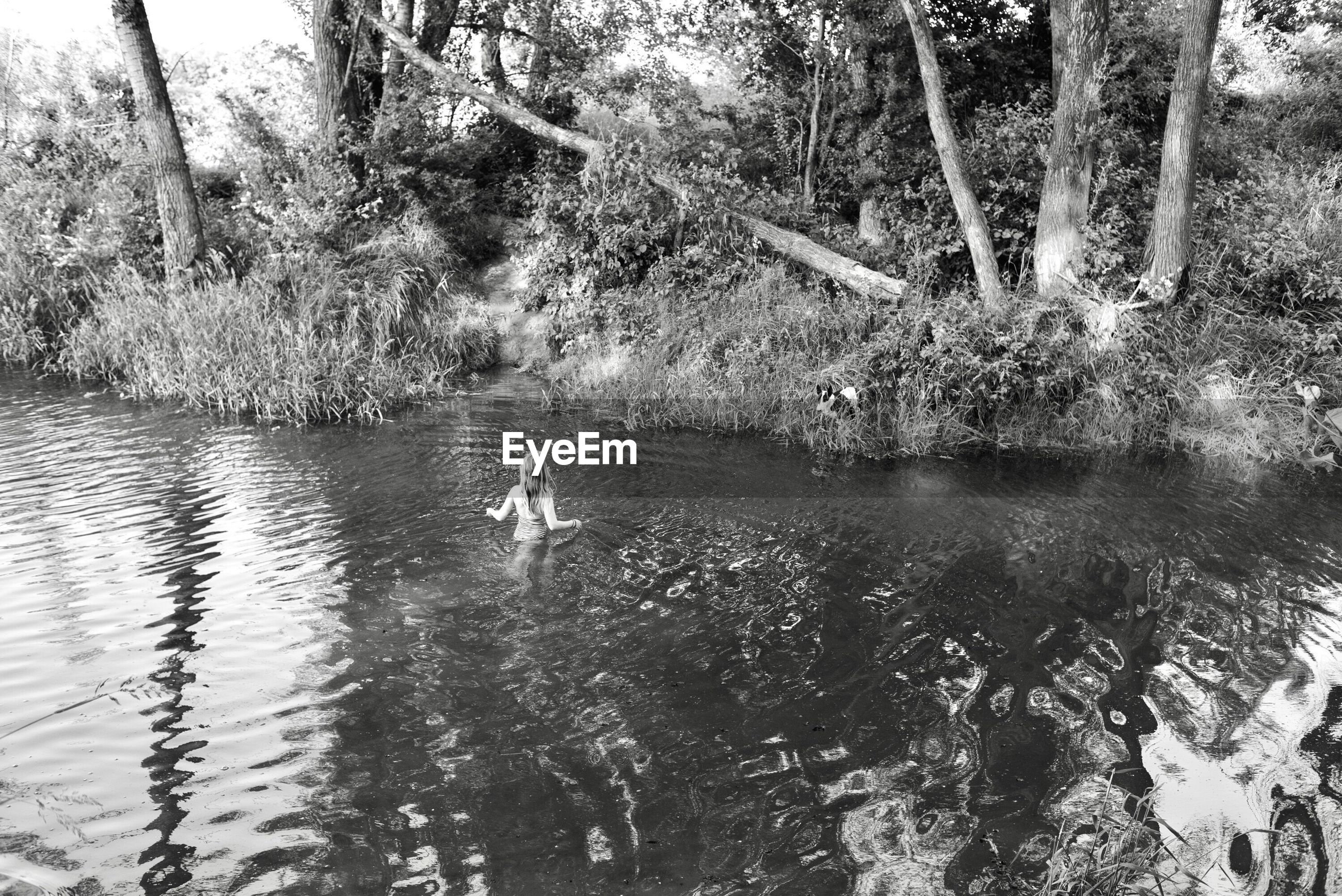 High angle view of woman swimming in lake at forest