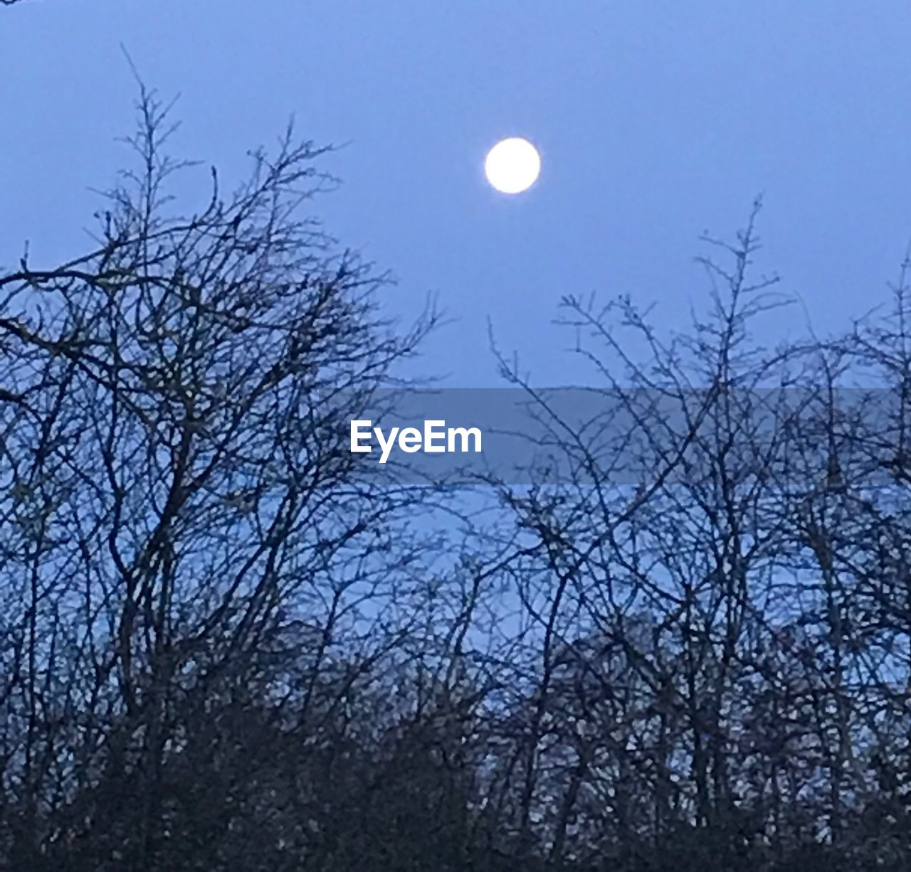 tree, moon, sky, plant, bare tree, low angle view, branch, nature, beauty in nature, night, scenics - nature, no people, silhouette, tranquility, space, dusk, tranquil scene, outdoors, full moon, astronomy, planetary moon, moonlight