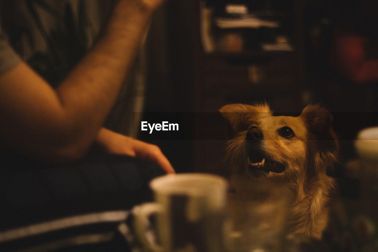 Dog looking at cropped man
