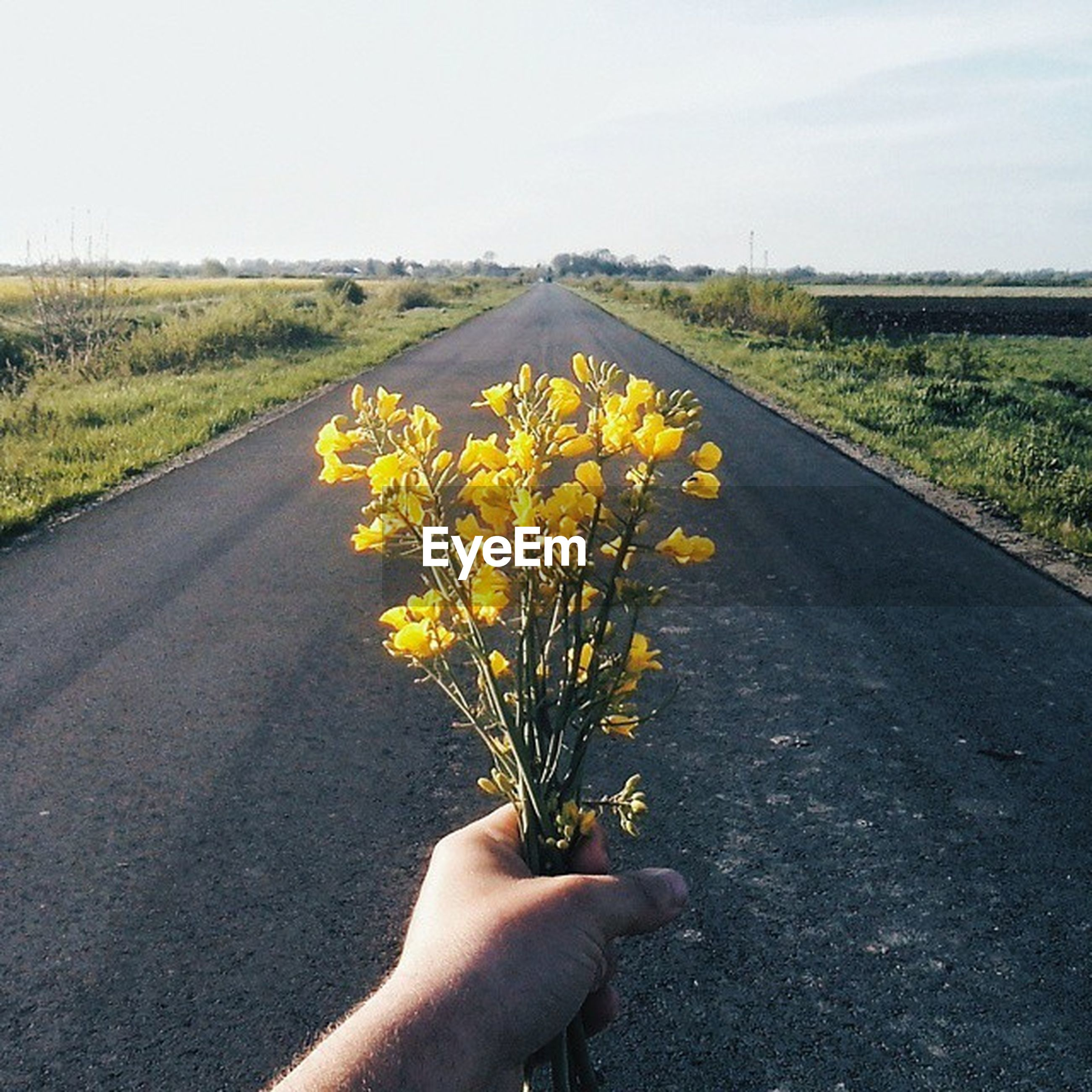 person, flower, personal perspective, unrecognizable person, yellow, field, holding, part of, road, growth, cropped, fragility, nature, beauty in nature, freshness, plant, sky