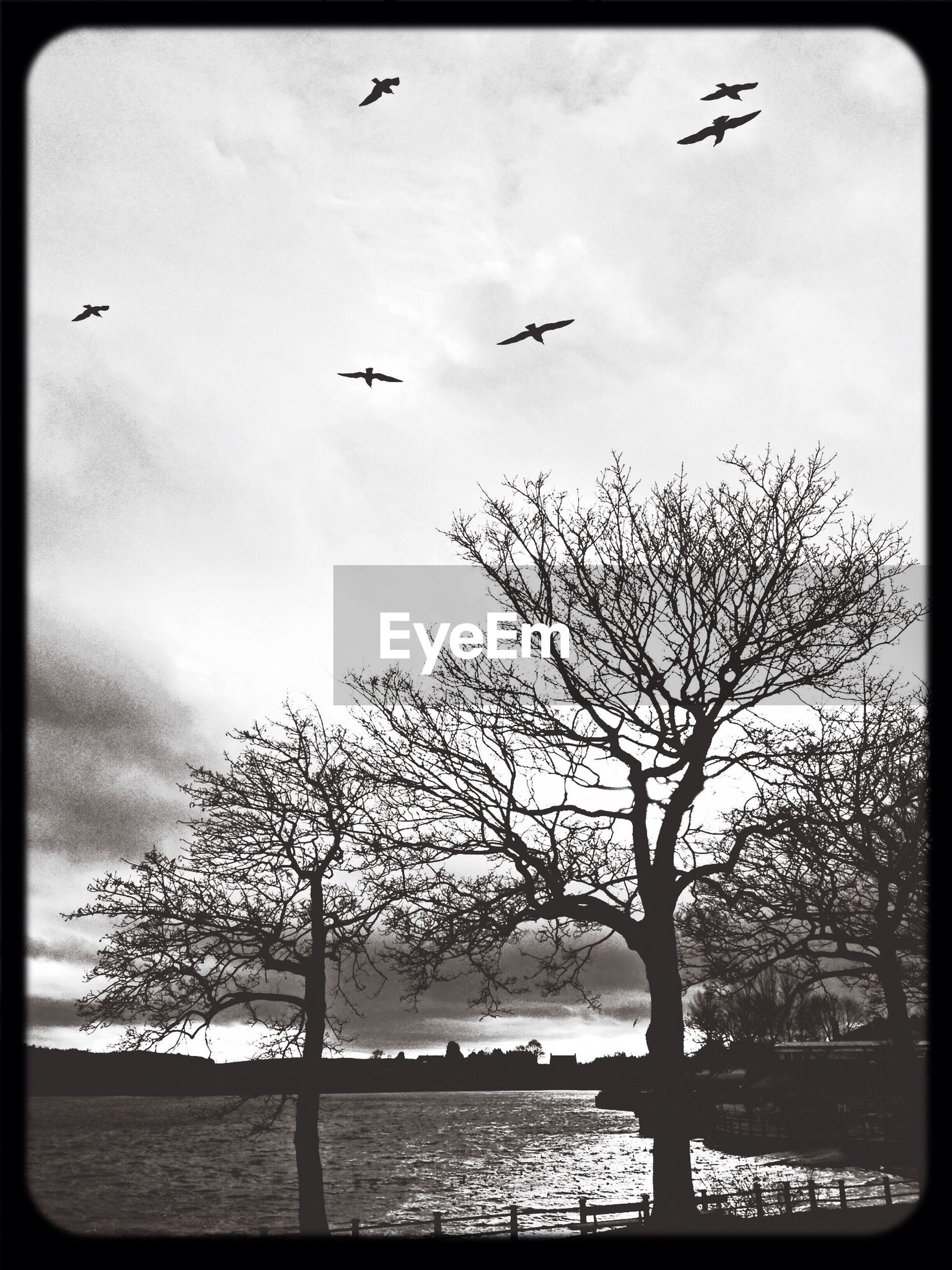 transfer print, flying, bird, tree, auto post production filter, sky, wildlife, animal themes, bare tree, animals in the wild, silhouette, scenics, tranquil scene, nature, tranquility, beauty in nature, water, mid-air, outdoors, cloud - sky
