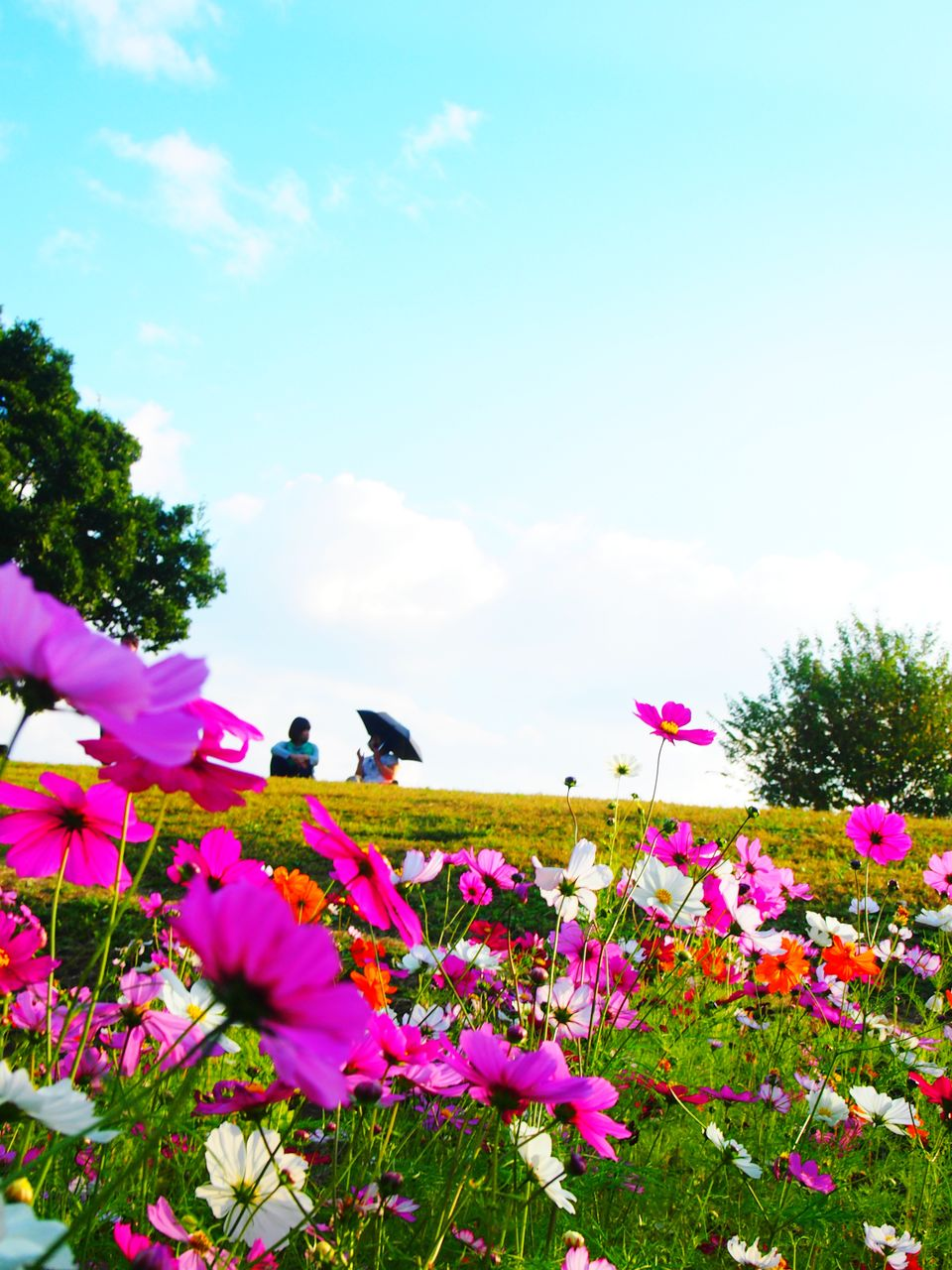 flower, fragility, petal, beauty in nature, nature, growth, freshness, one animal, animal themes, day, no people, plant, pink color, flower head, sky, cloud - sky, outdoors, blooming, insect, animals in the wild, tree, close-up, buzzing, flying