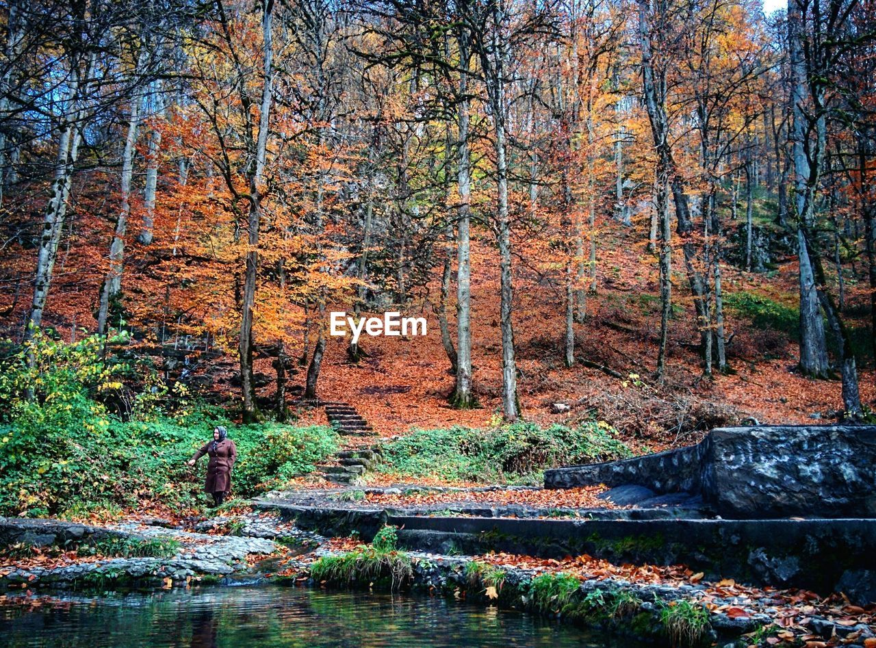 autumn, forest, tree, nature, beauty in nature, scenics, leaf, reflection, woodland, multi colored, outdoors, tranquil scene, water, tranquility, landscape, no people, idyllic, vibrant color, river, sunlight, day, nature reserve, tree trunk, rural scene, wilderness area, beauty, branch, tree area, sky