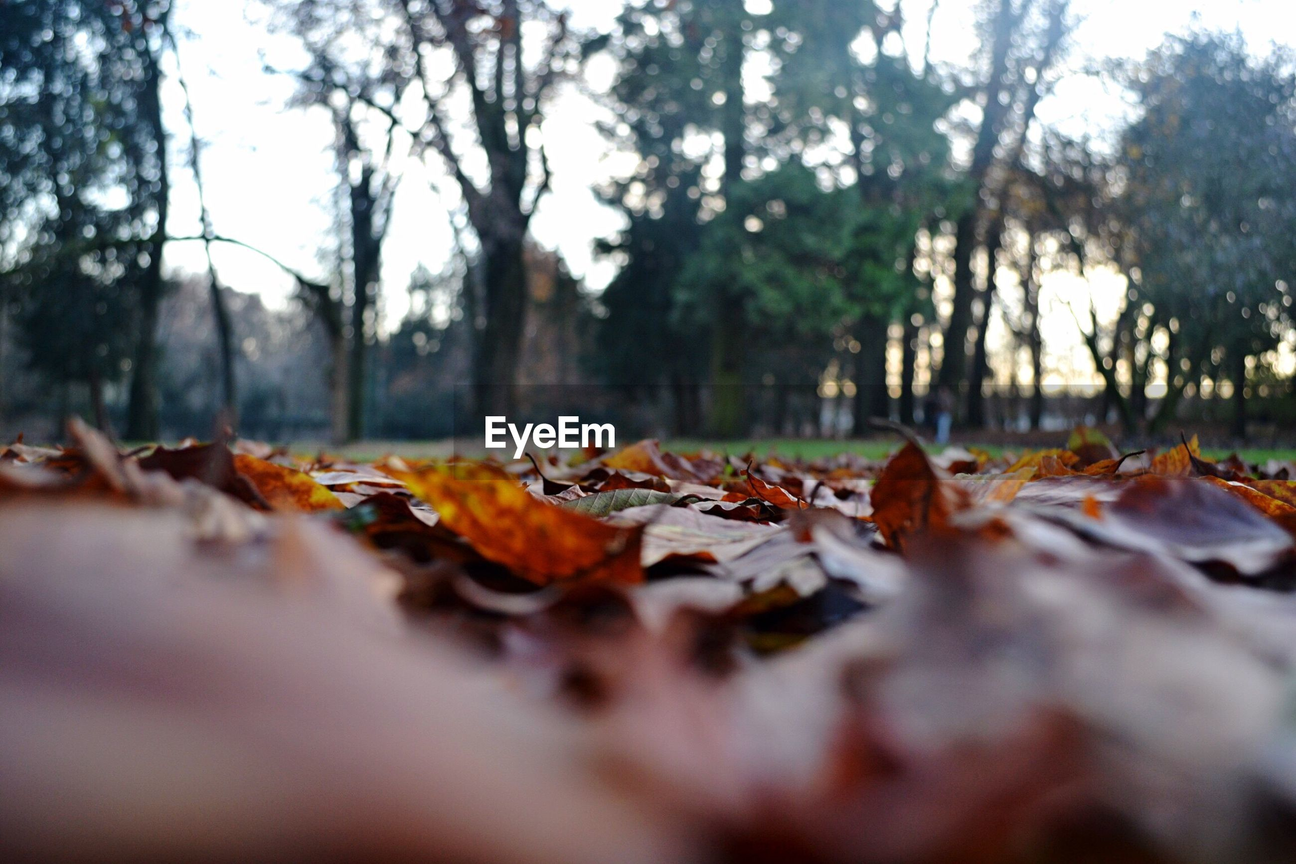 autumn, change, leaf, tree, dry, selective focus, nature, fallen, leaves, surface level, no people, close-up, outdoors, fallen leaf, beauty in nature, maple, day, maple leaf, fall