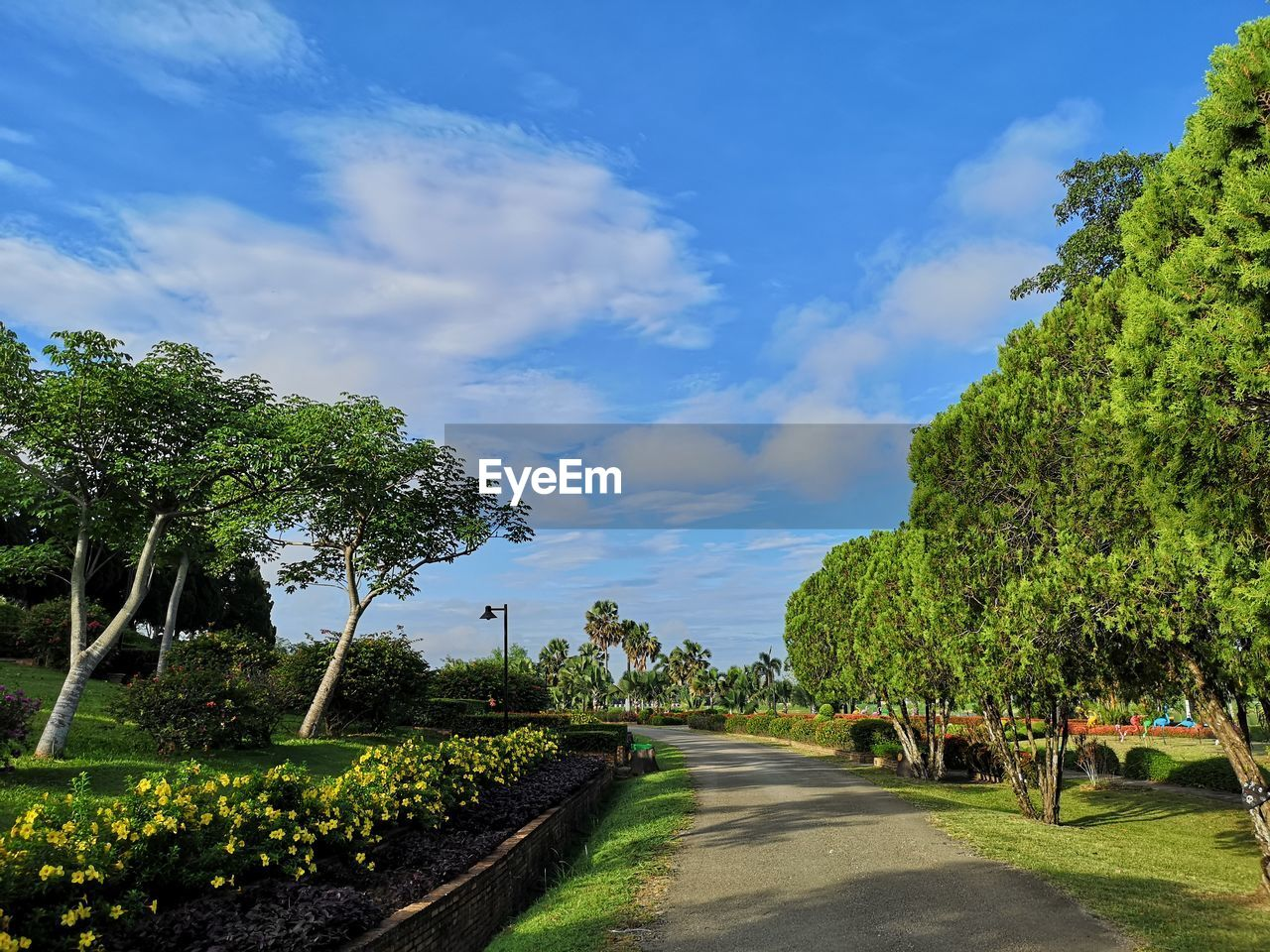 plant, sky, tree, cloud - sky, transportation, growth, nature, road, green color, beauty in nature, the way forward, direction, tranquility, day, tranquil scene, scenics - nature, sunlight, no people, land, outdoors, diminishing perspective, long
