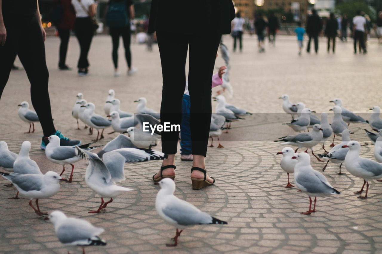bird, group of animals, animals in the wild, animal themes, animal, vertebrate, animal wildlife, large group of animals, human body part, day, low section, pigeon, flock of birds, real people, body part, incidental people, focus on foreground, street, one person, city, outdoors, seagull, finger
