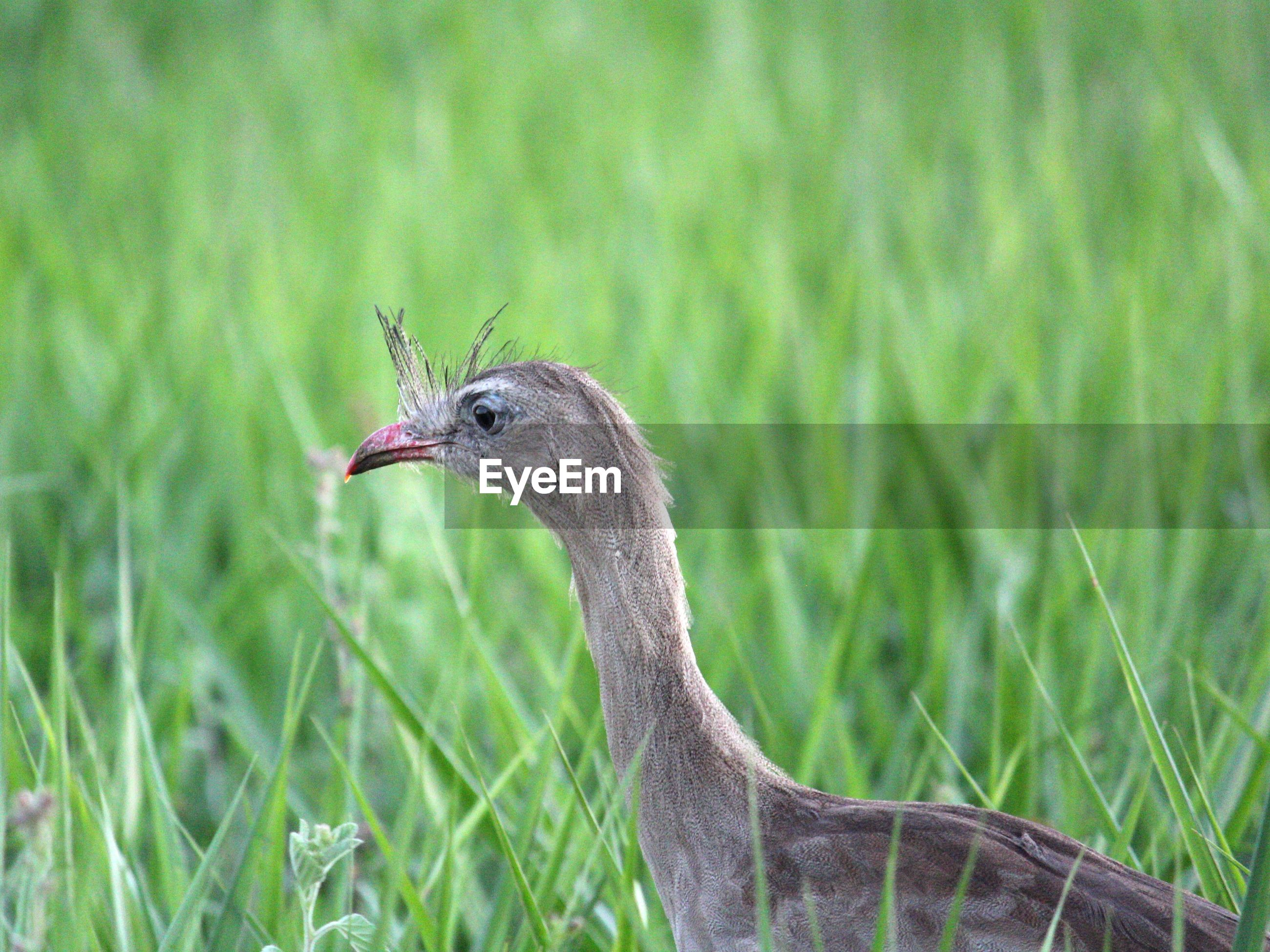 CLOSE-UP OF A BIRD ON A LAND