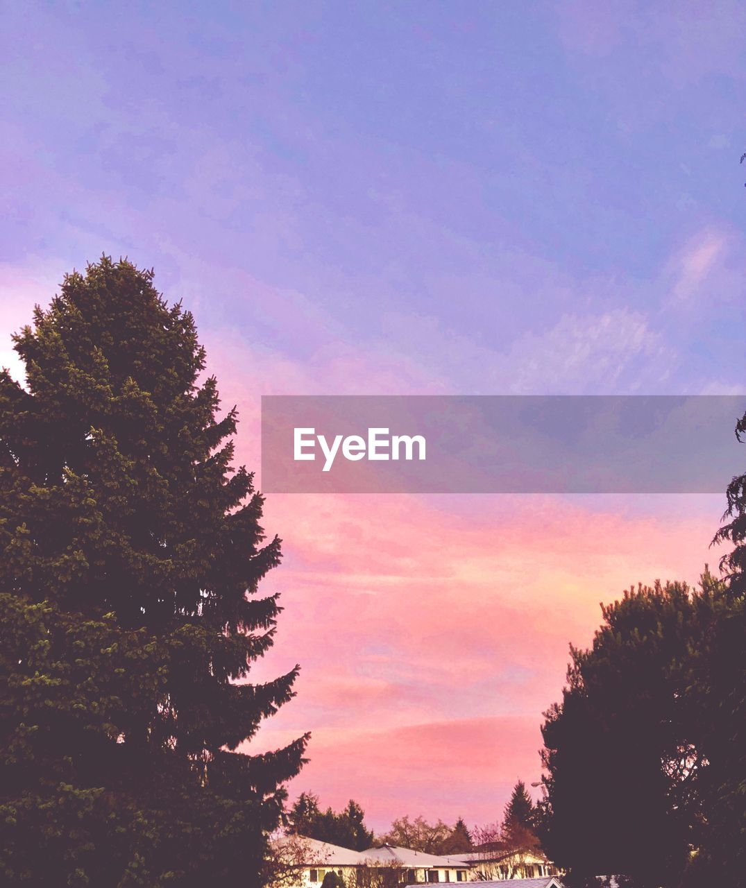 tree, sky, plant, beauty in nature, tranquility, sunset, scenics - nature, tranquil scene, nature, growth, cloud - sky, no people, silhouette, outdoors, non-urban scene, land, idyllic, orange color, low angle view, forest, coniferous tree
