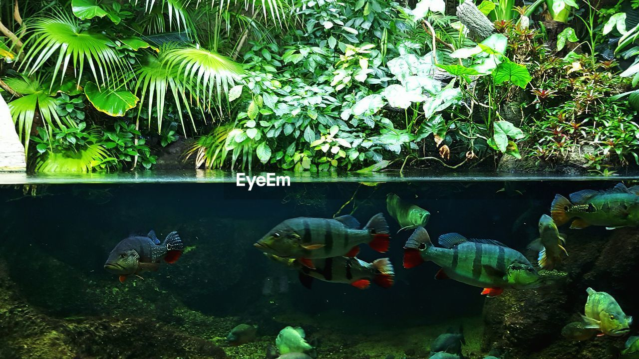 water, animal themes, sea life, fish, animals in the wild, underwater, swimming, nature, no people, wildlife, aquarium, plant, animals in captivity, large group of animals, animal wildlife, green color, beauty in nature, day, close-up, outdoors, undersea