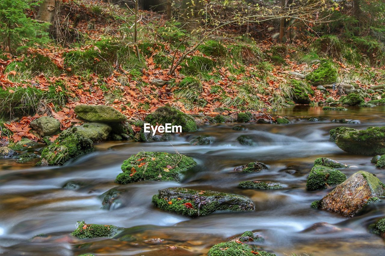 motion, water, nature, flowing water, waterfall, long exposure, beauty in nature, rock - object, scenics, outdoors, forest, stream, tranquility, blurred motion, tranquil scene, day, moss, no people, tree, autumn, plant, growth, running water, travel destinations, grass