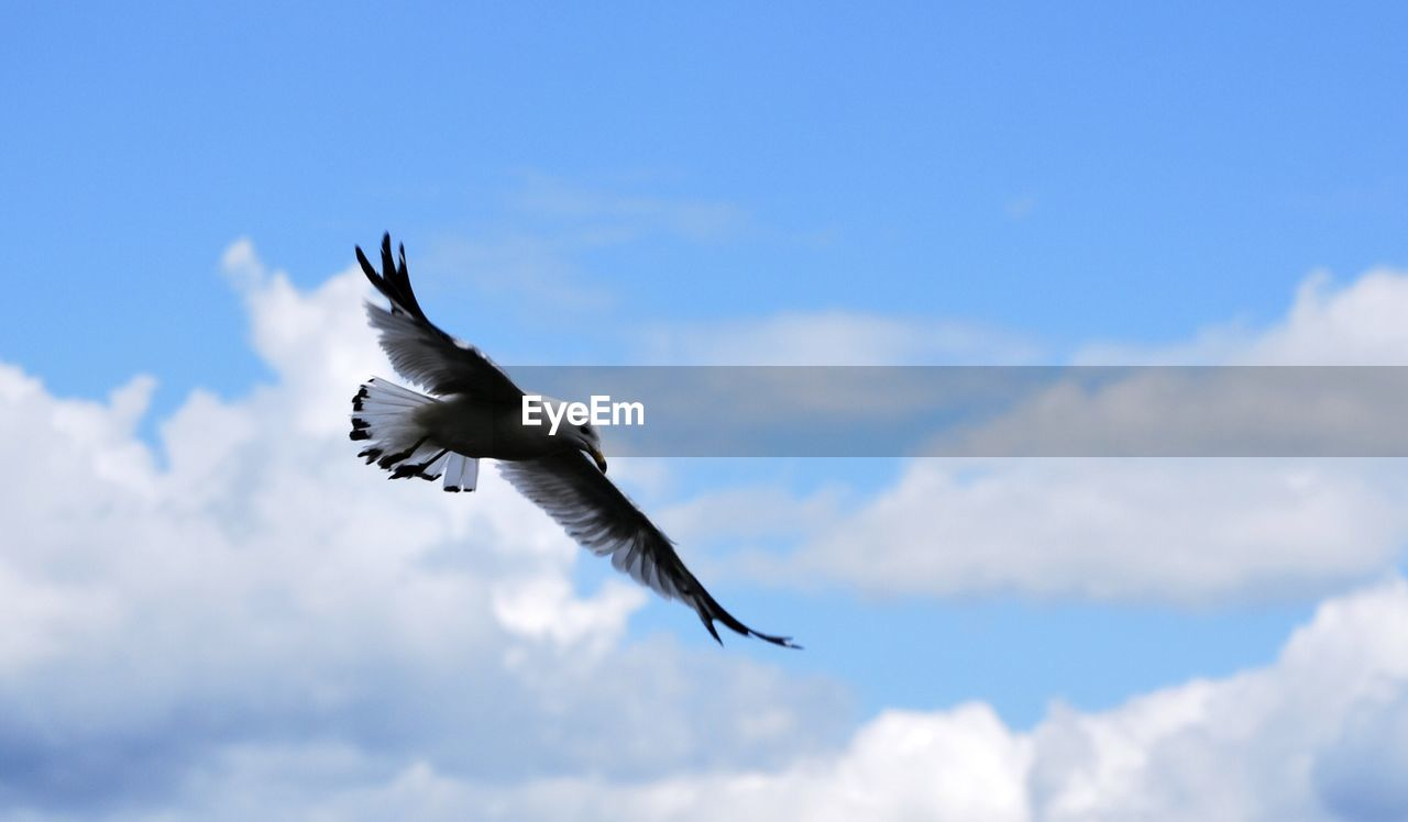 Low Angle View Of Bird Against The Sky