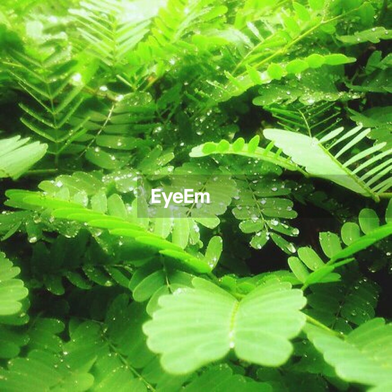 green color, leaf, nature, growth, plant, no people, close-up, full frame, water, day, outdoors, freshness, backgrounds, beauty in nature
