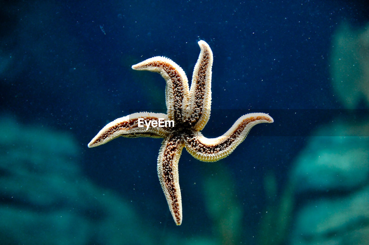 Starfish lying on seabed