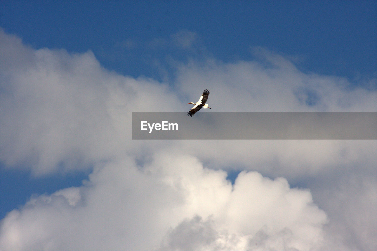 LOW ANGLE VIEW OF BIRD IN FLIGHT AGAINST SKY
