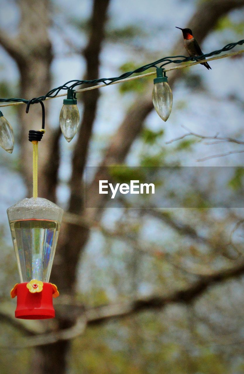 hanging, animals in the wild, bird feeder, focus on foreground, no people, animal wildlife, lighting equipment, animal themes, bird, day, outdoors, tree, nature, close-up, perching