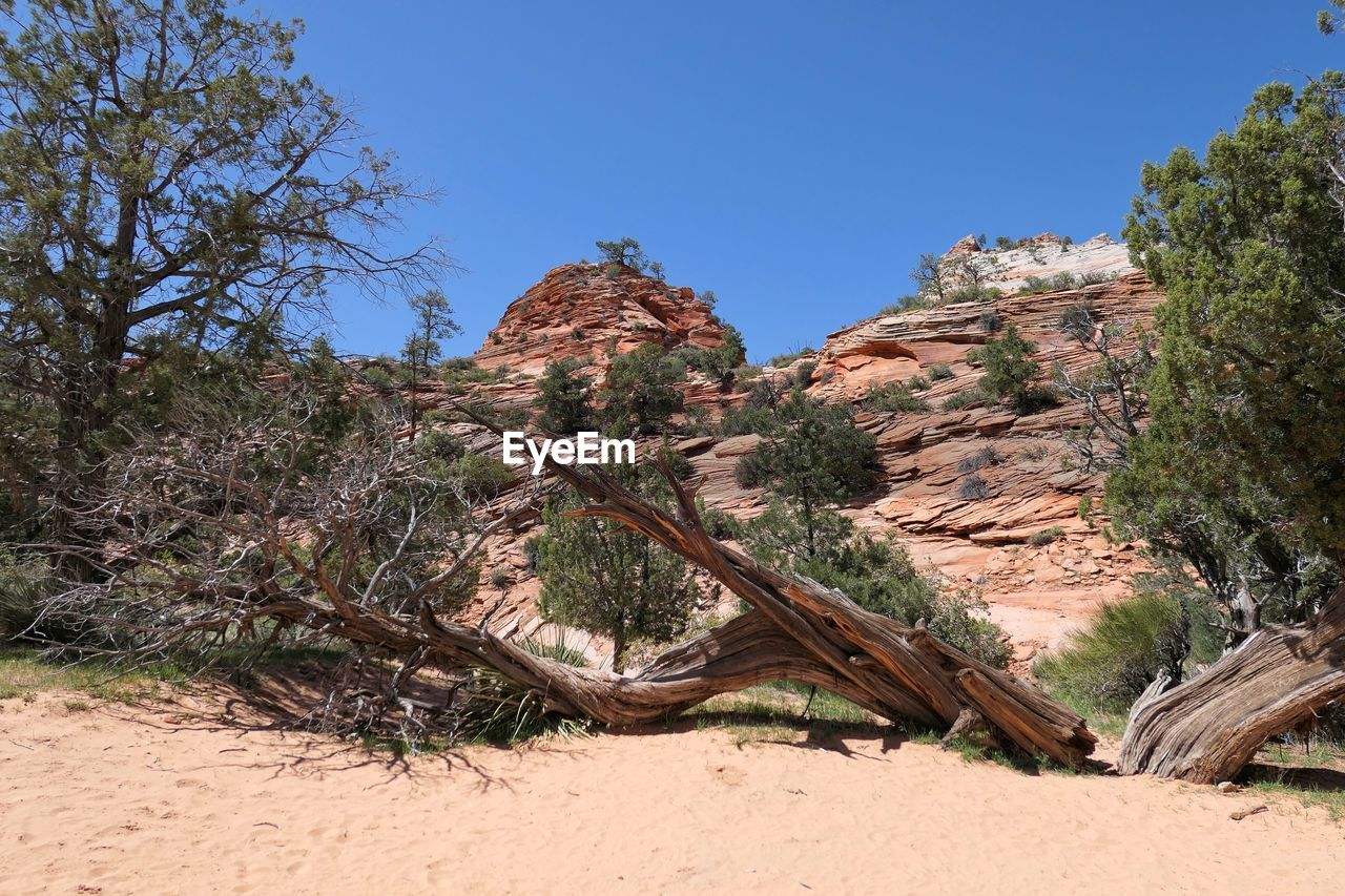 sky, plant, tree, land, clear sky, nature, tranquility, day, rock, no people, beauty in nature, non-urban scene, scenics - nature, tranquil scene, blue, rock formation, environment, rock - object, growth, sunlight, outdoors, climate, arid climate, eroded