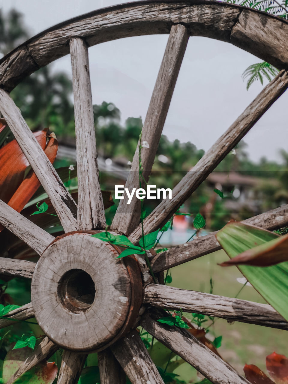 wood - material, wheel, focus on foreground, day, no people, metal, wagon wheel, nature, old, close-up, transportation, plant, outdoors, shape, abandoned, tree, obsolete, weathered, rusty, water, spoke