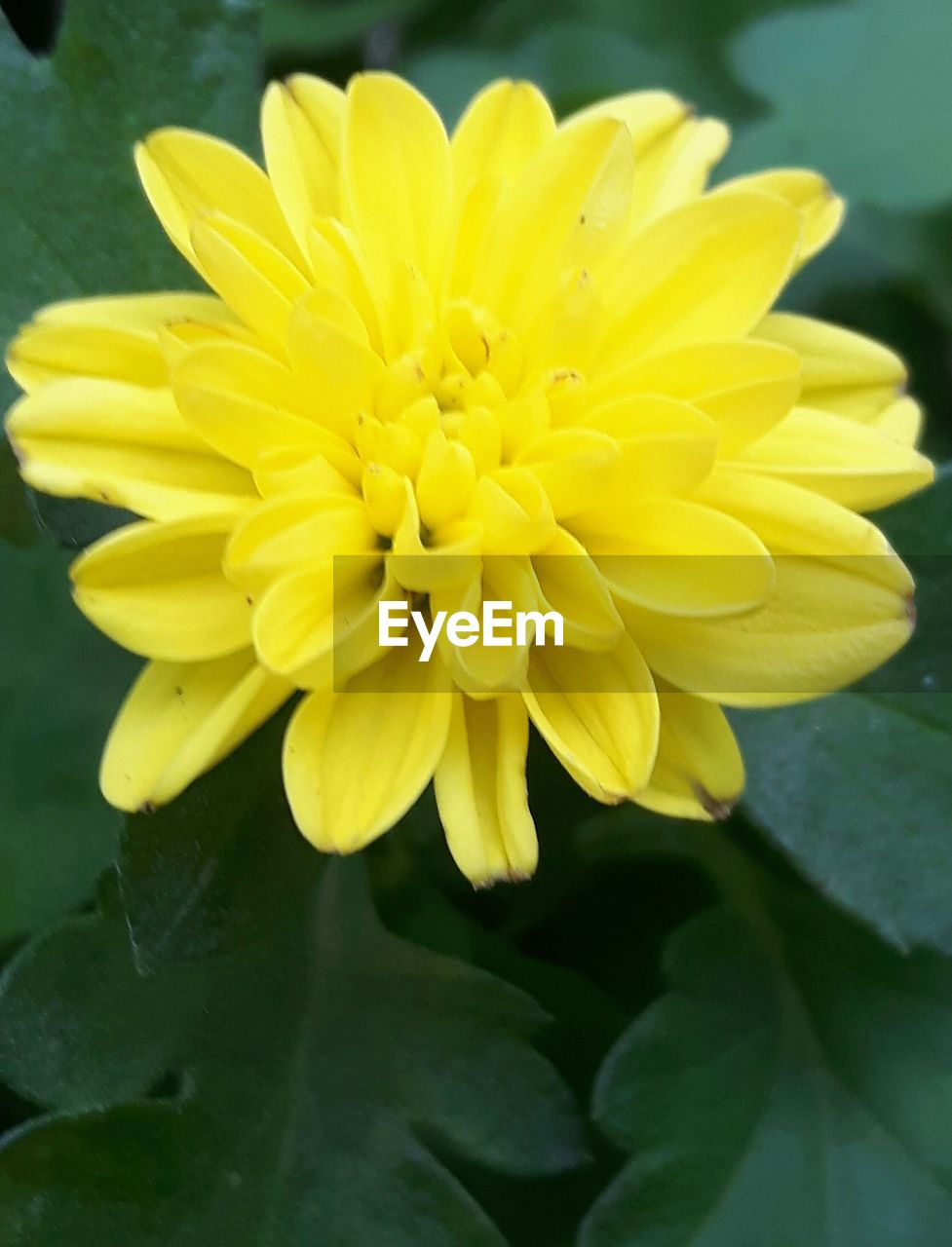 flower, petal, yellow, nature, beauty in nature, fragility, plant, growth, flower head, freshness, blooming, close-up, no people, outdoors, day