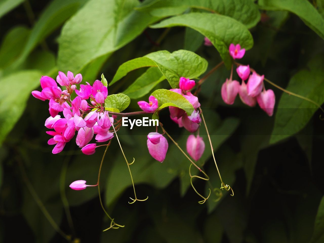 Close-Up Of Pink Flowers Growing On Plant