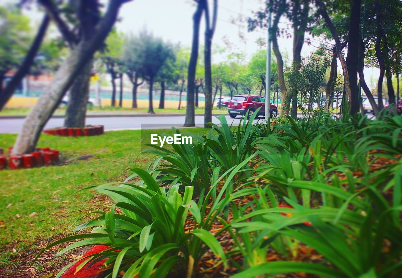 tree, grass, growth, nature, green color, transportation, day, beauty in nature, leaf, tranquil scene, outdoors, car, no people, tranquility, mode of transport, plant, land vehicle, scenics, tree trunk, red, branch, water, flower, sky, close-up