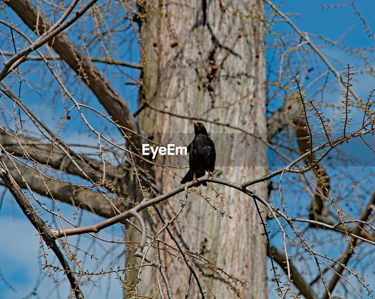 bird, branch, tree, animals in the wild, perching, animal wildlife, one animal, animal themes, low angle view, bare tree, nature, day, focus on foreground, no people, outdoors, beauty in nature, sky