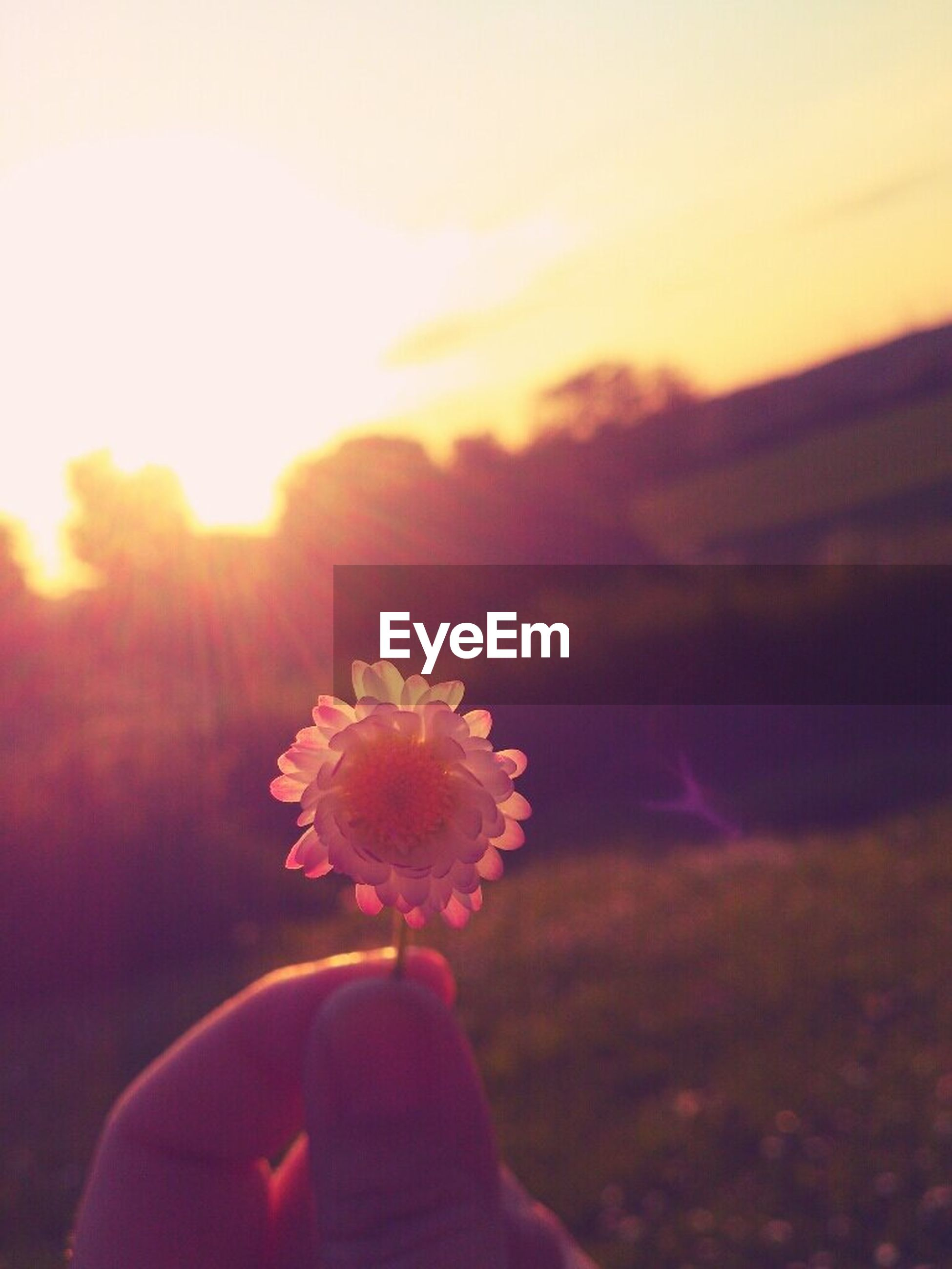 person, part of, personal perspective, holding, lifestyles, sunset, unrecognizable person, leisure activity, cropped, focus on foreground, sky, flower, beauty in nature, lens flare, nature, close-up