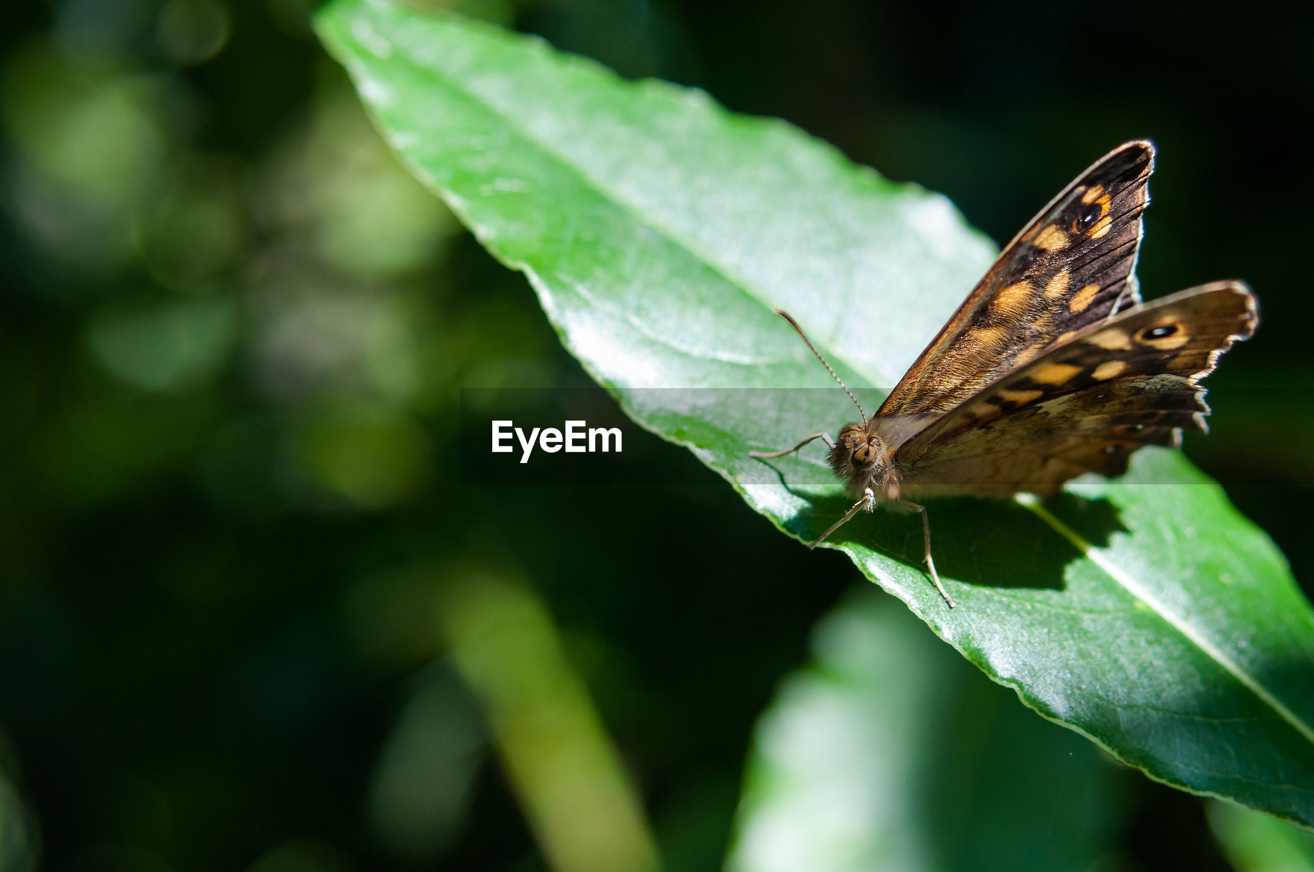 CLOSE-UP OF BUTTERFLY ON LEAF AGAINST BLURRED BACKGROUND