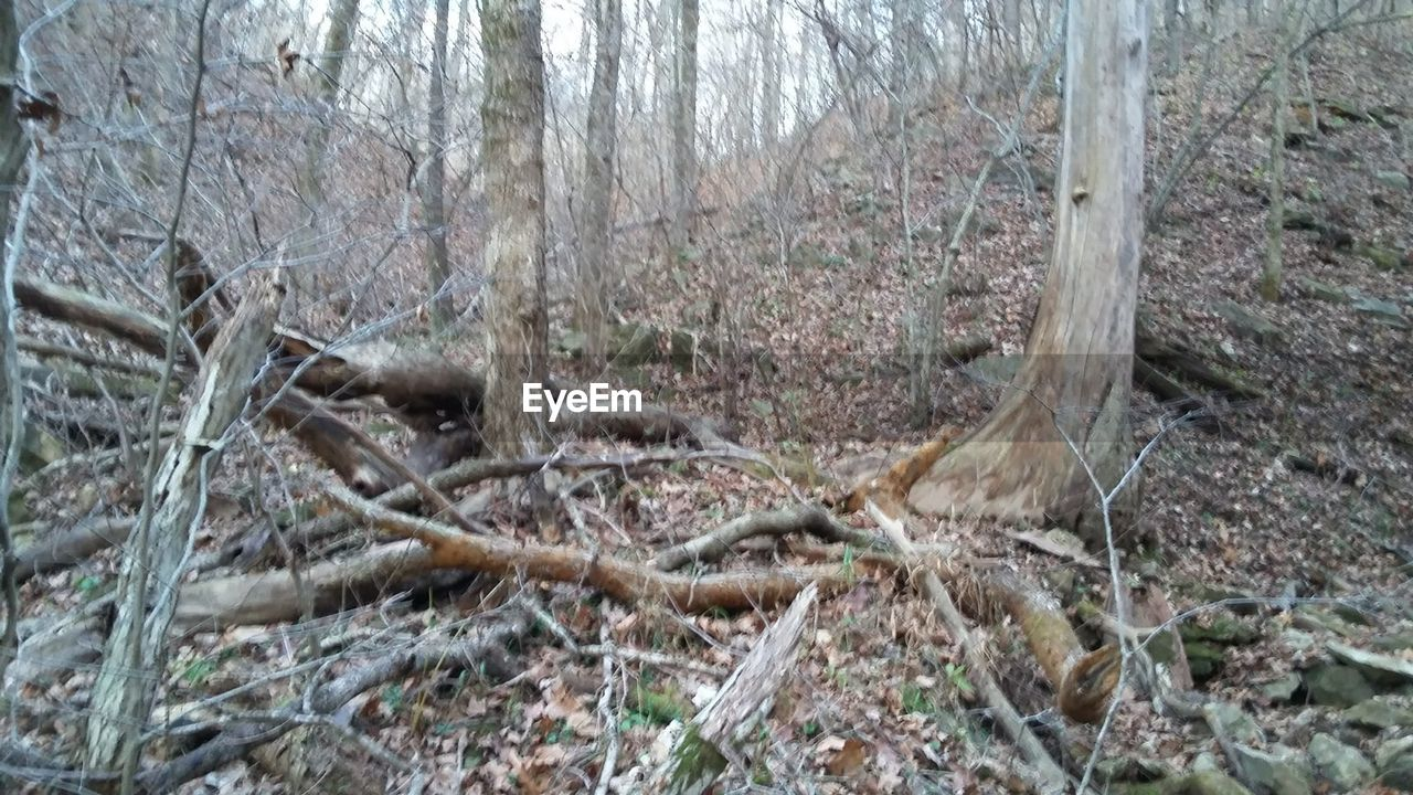forest, day, nature, tree, no people, tree trunk, outdoors, branch, close-up