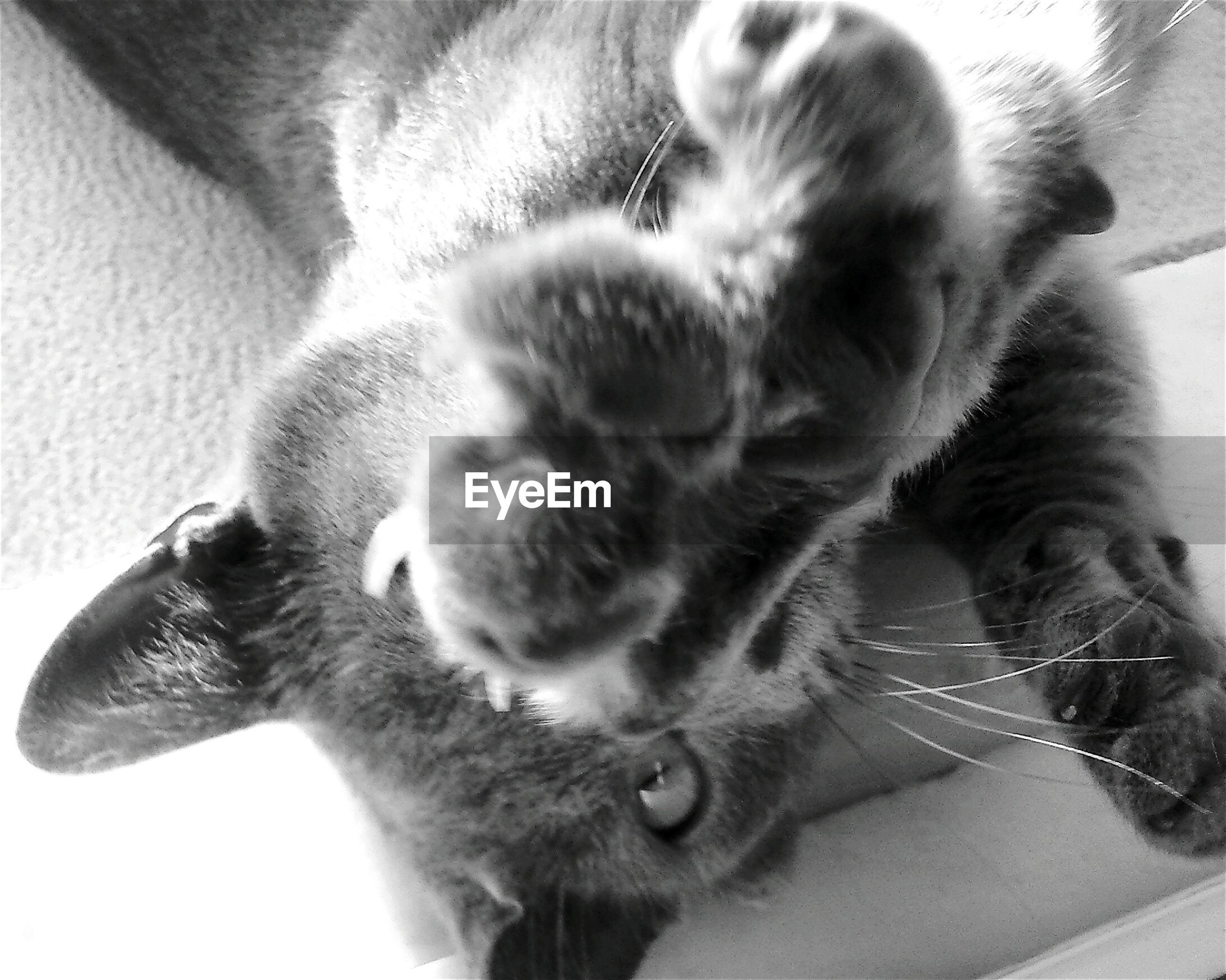 pets, domestic animals, animal themes, mammal, one animal, domestic cat, indoors, feline, no people, cat, close-up, day