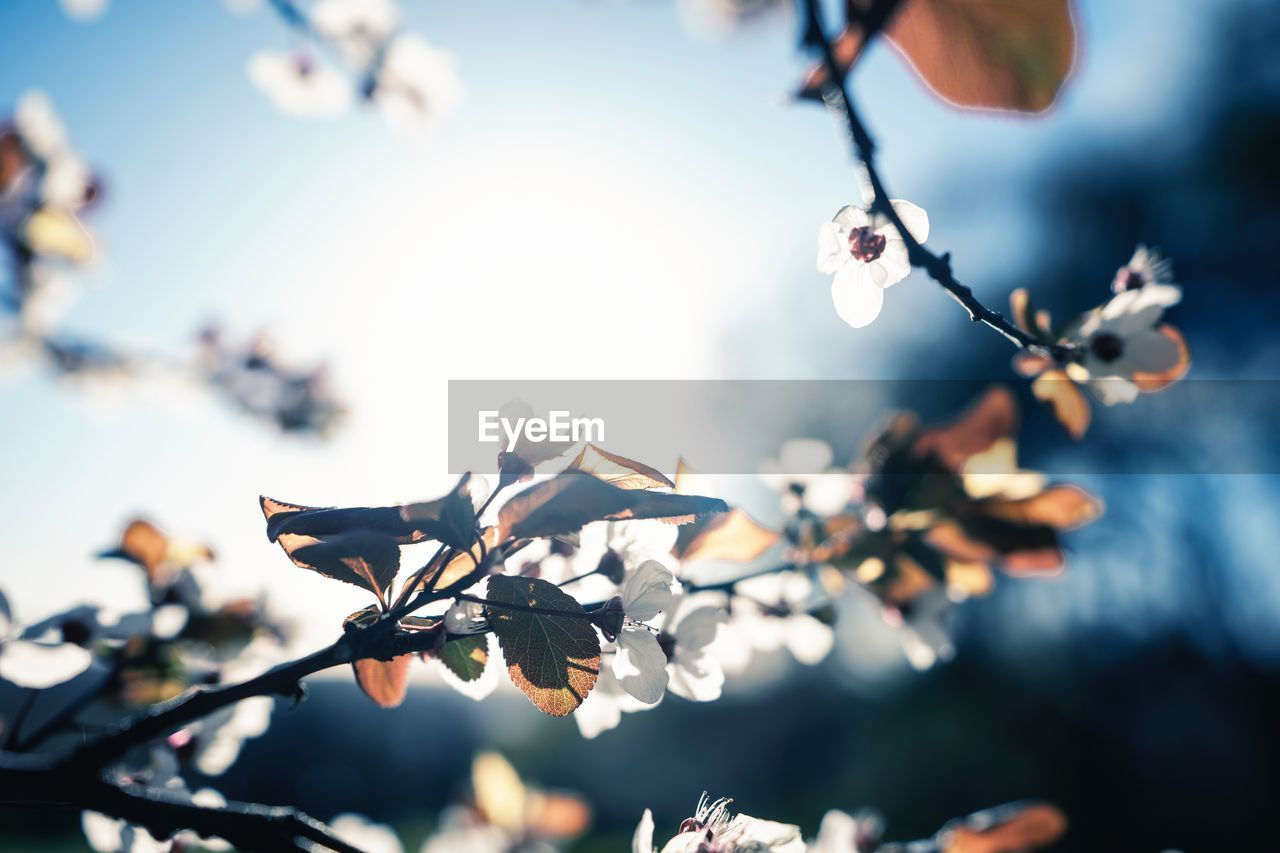 plant, growth, focus on foreground, fragility, vulnerability, flower, beauty in nature, flowering plant, close-up, freshness, no people, tree, nature, day, selective focus, sunlight, branch, sky, outdoors, low angle view, springtime, flower head, softness