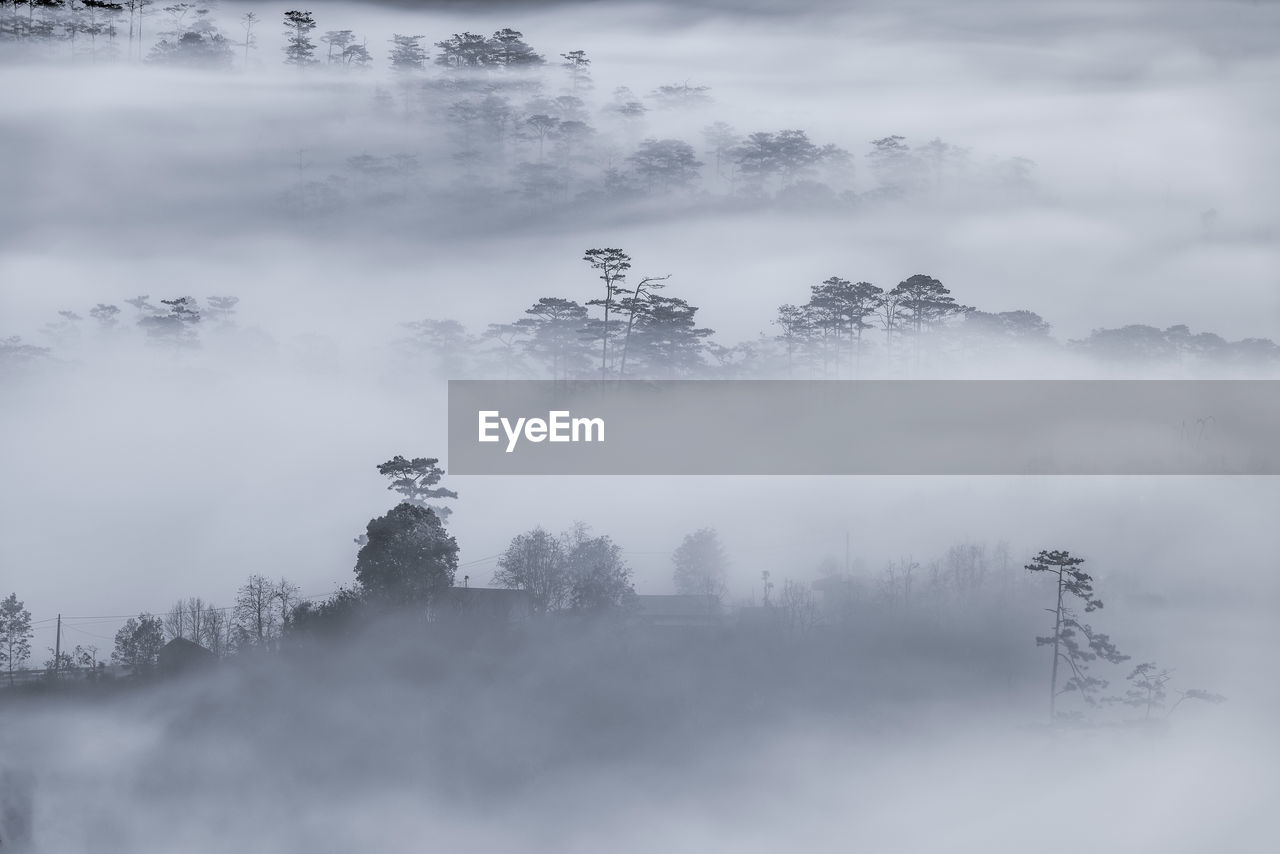Trees against sky during foggy weather