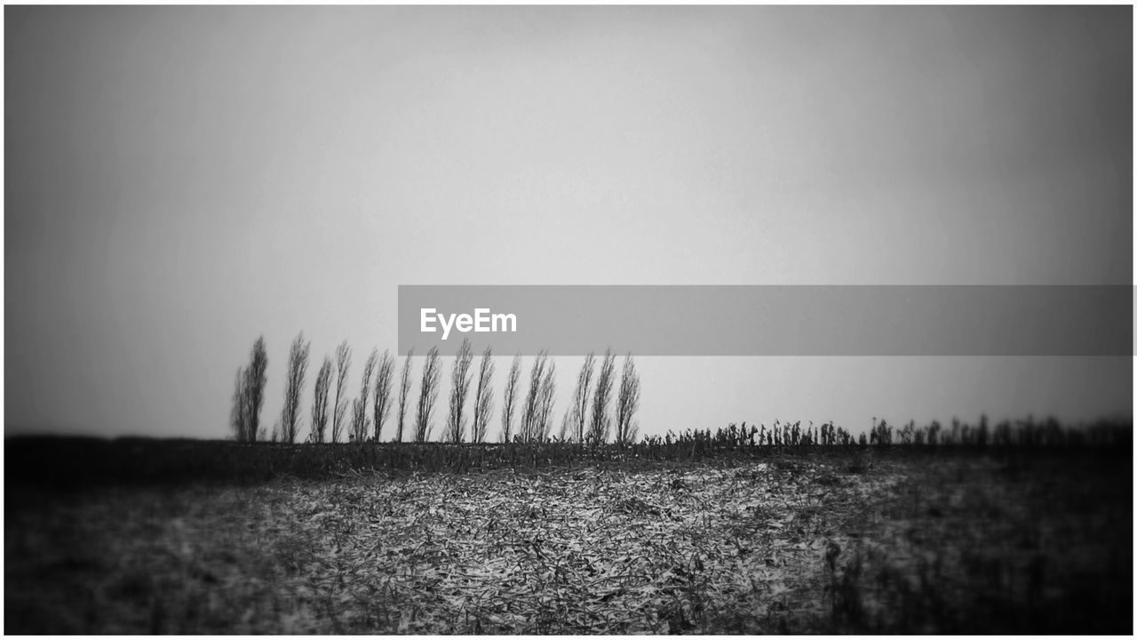 auto post production filter, field, tranquility, landscape, tranquil scene, nature, scenics, outdoors, beauty in nature, grass, no people, agriculture, vignette, rural scene, day, clear sky, horizon over land, growth, sky, panoramic, tree, hay bale
