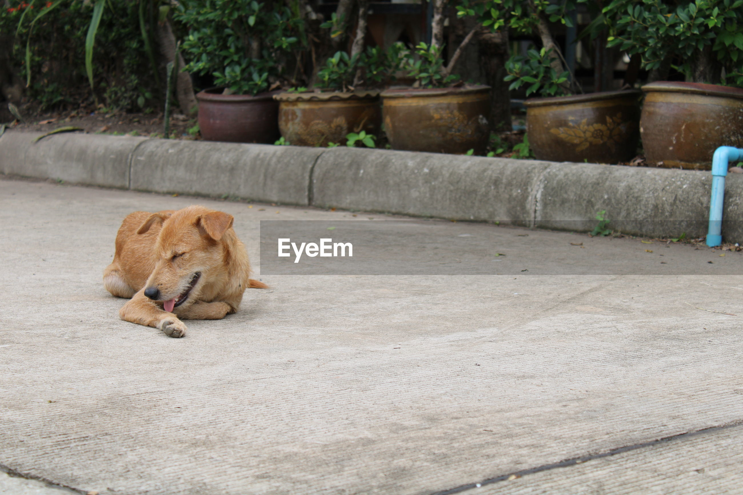 A dog lying on the road