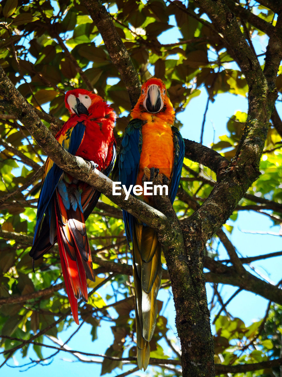 tree, bird, animal, vertebrate, animal themes, parrot, animals in the wild, low angle view, animal wildlife, branch, perching, plant, nature, day, no people, macaw, two animals, beauty in nature, scarlet macaw, outdoors, rainbow lorikeet