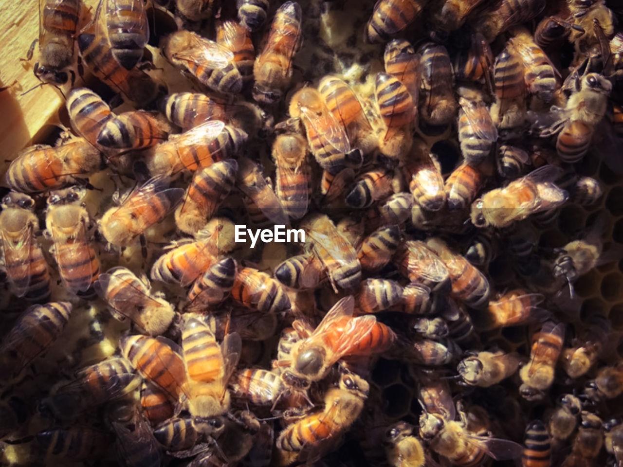FULL FRAME SHOT OF HONEY BEE