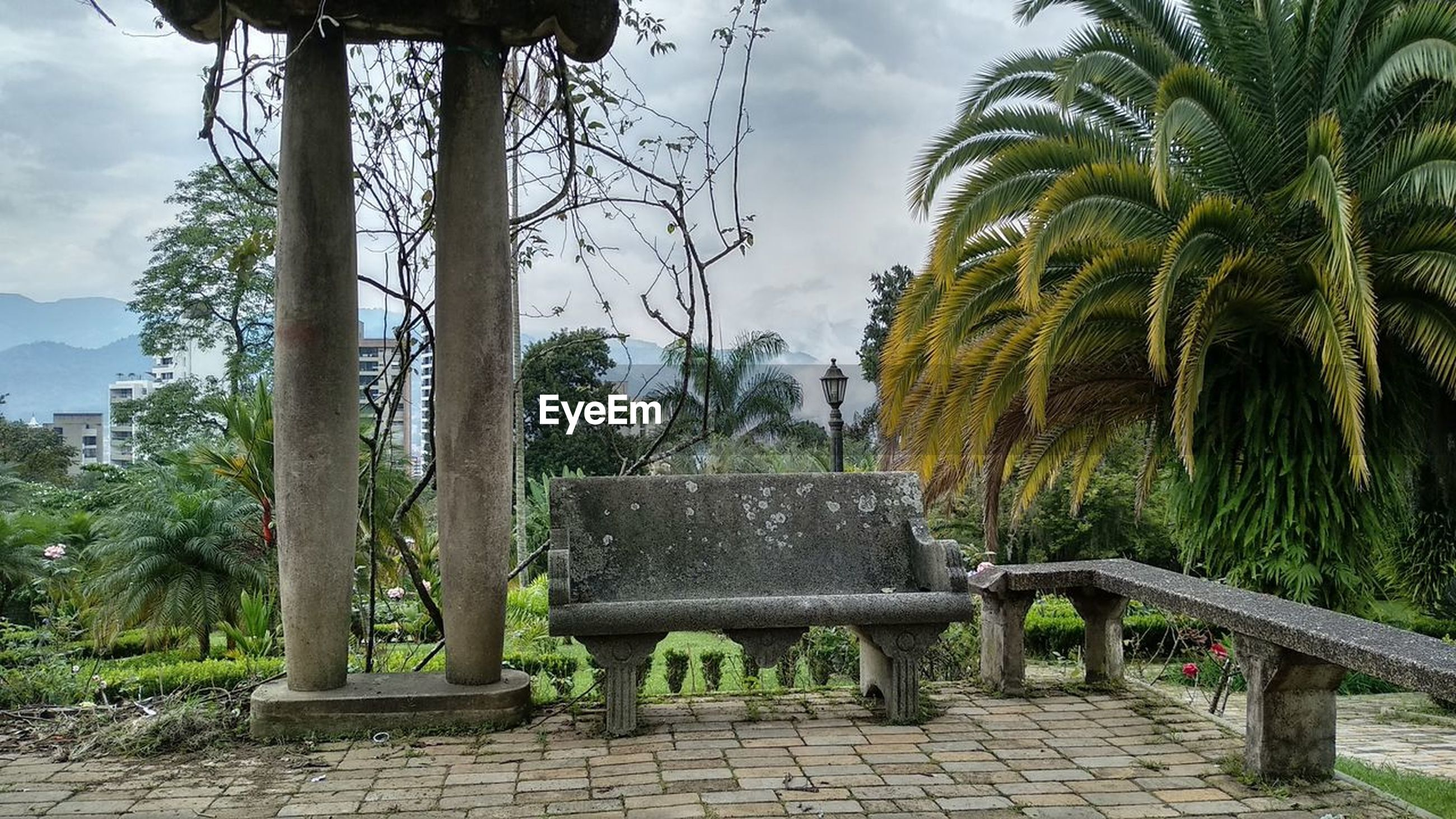 tree, plant, nature, growth, sky, palm tree, tree trunk, tropical climate, trunk, day, architecture, beauty in nature, park, built structure, no people, green color, tranquility, park - man made space, cloud - sky, outdoors, park bench