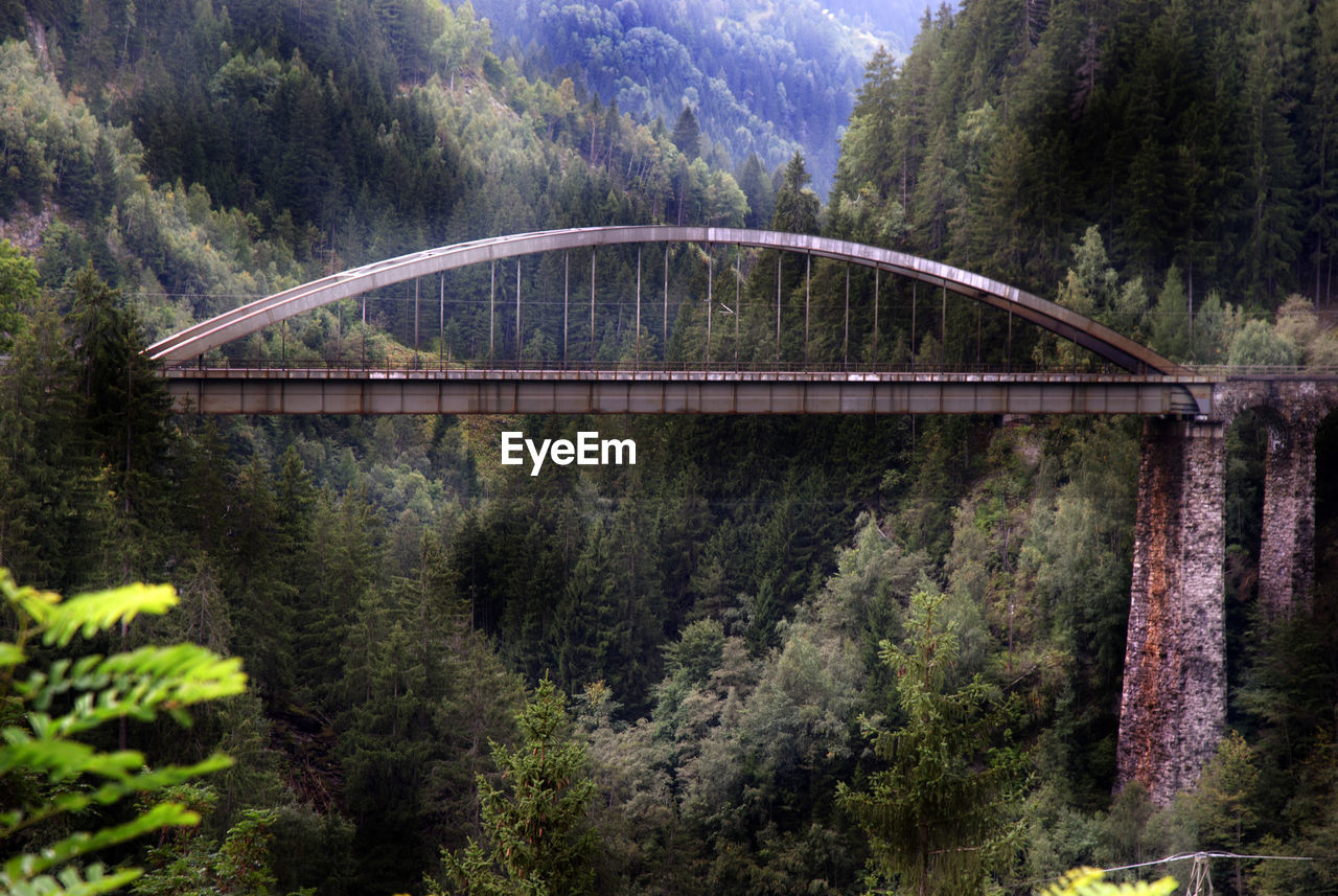 SCENIC VIEW OF BRIDGE OVER FOREST