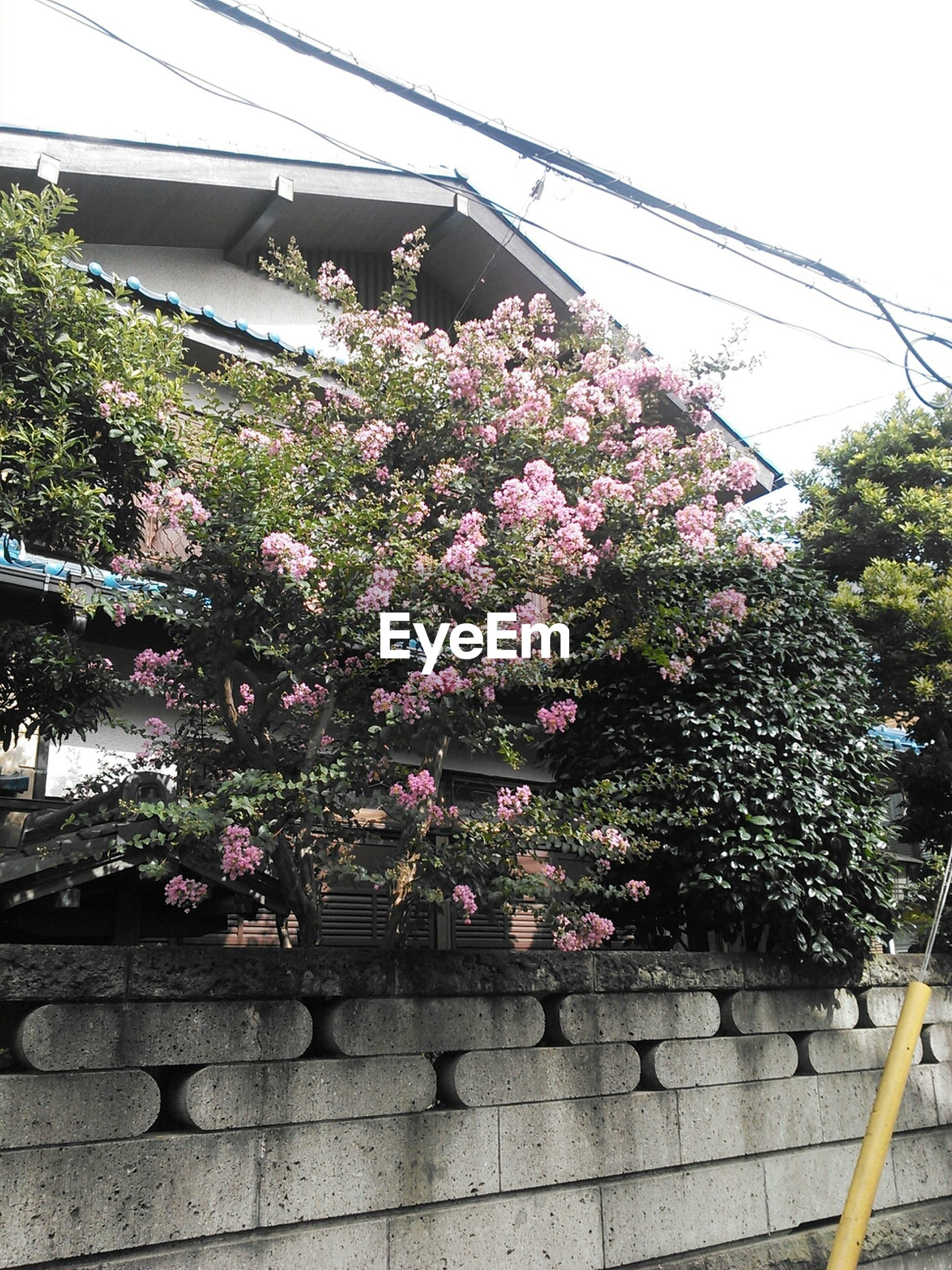 flower, growth, freshness, built structure, building exterior, tree, architecture, low angle view, plant, pink color, fragility, potted plant, nature, day, outdoors, blooming, house, clear sky, railing, sky