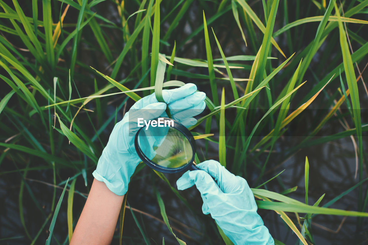 Cropped hands of woman examining plants with magnifying glass