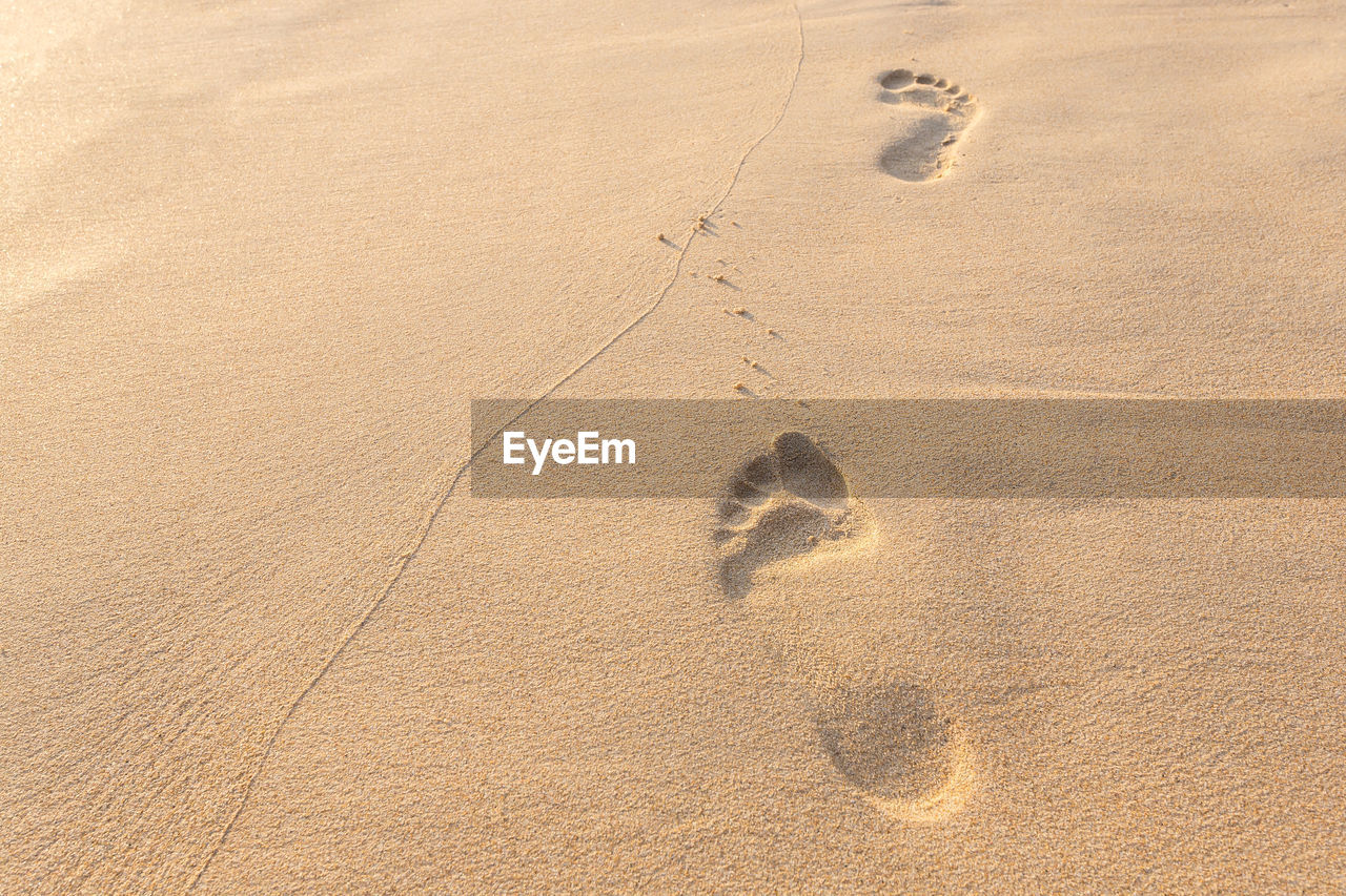 land, footprint, sand, no people, high angle view, paw print, animal track, track - imprint, nature, beach, day, print, full frame, mystery, animal, backgrounds, pattern, animal themes, outdoors, absence, arid climate