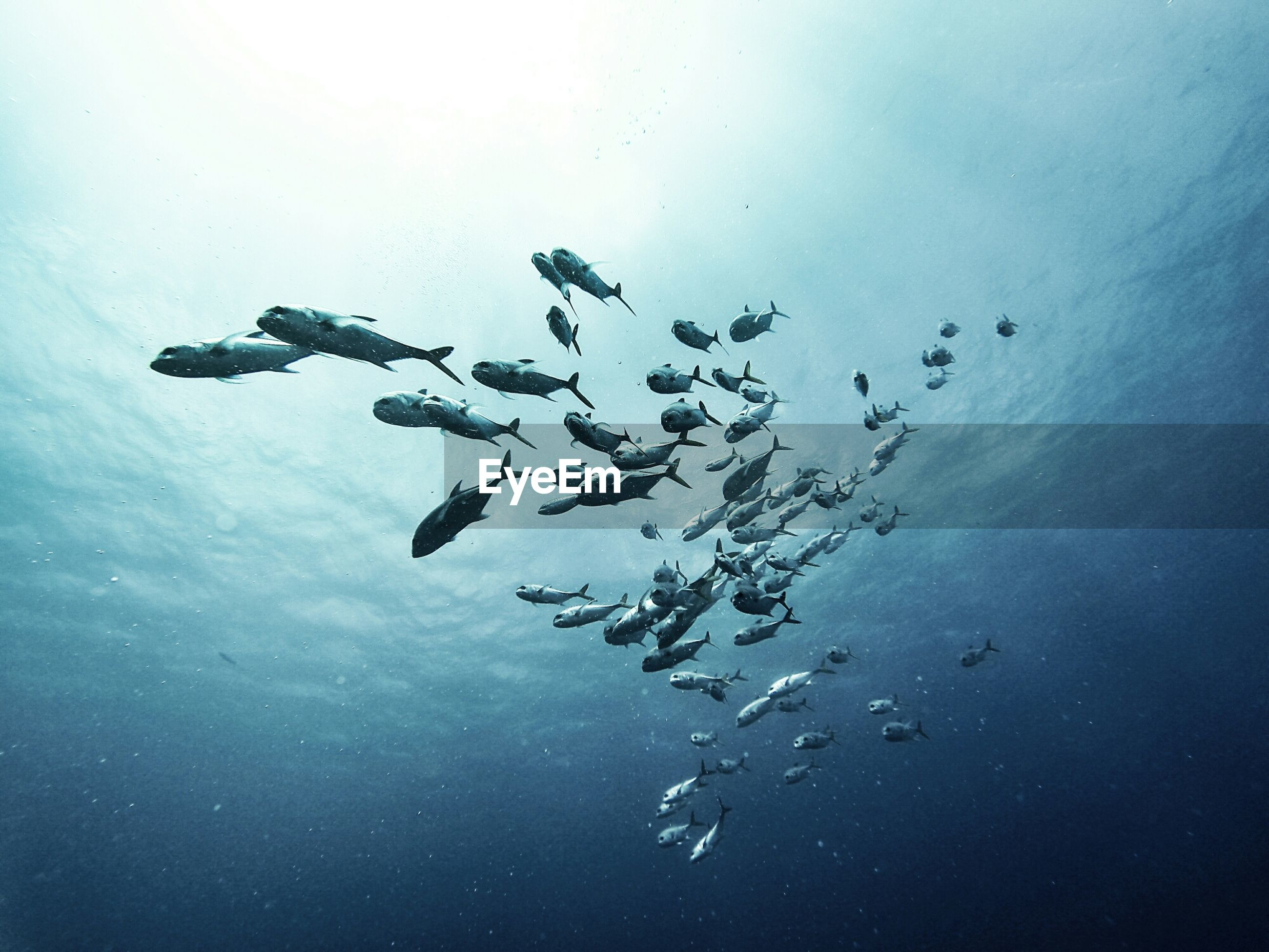 School of fish swimming in water